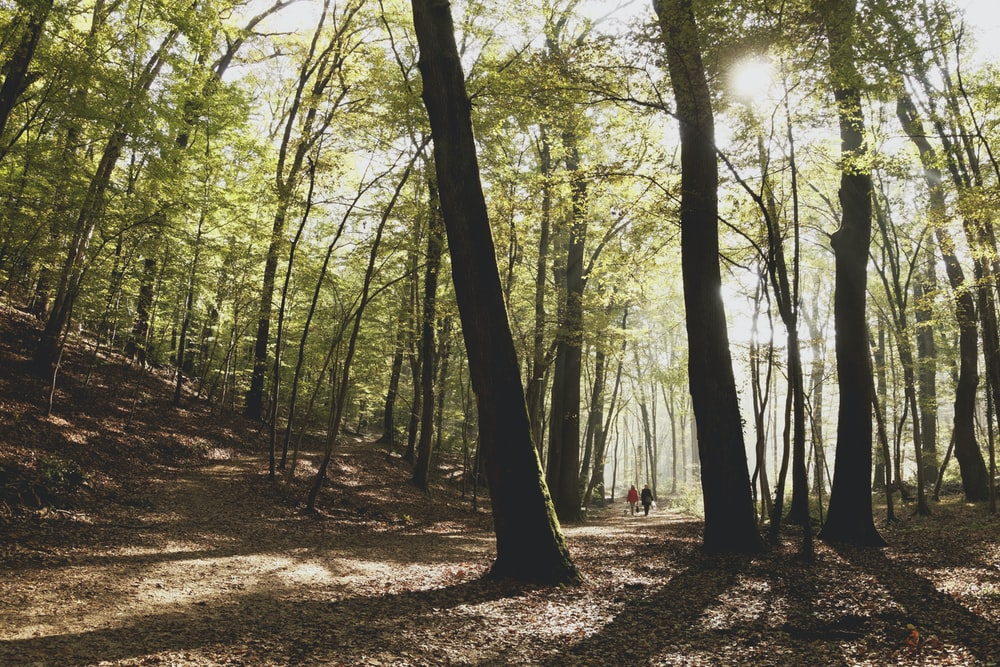 people walking in forest during daytime