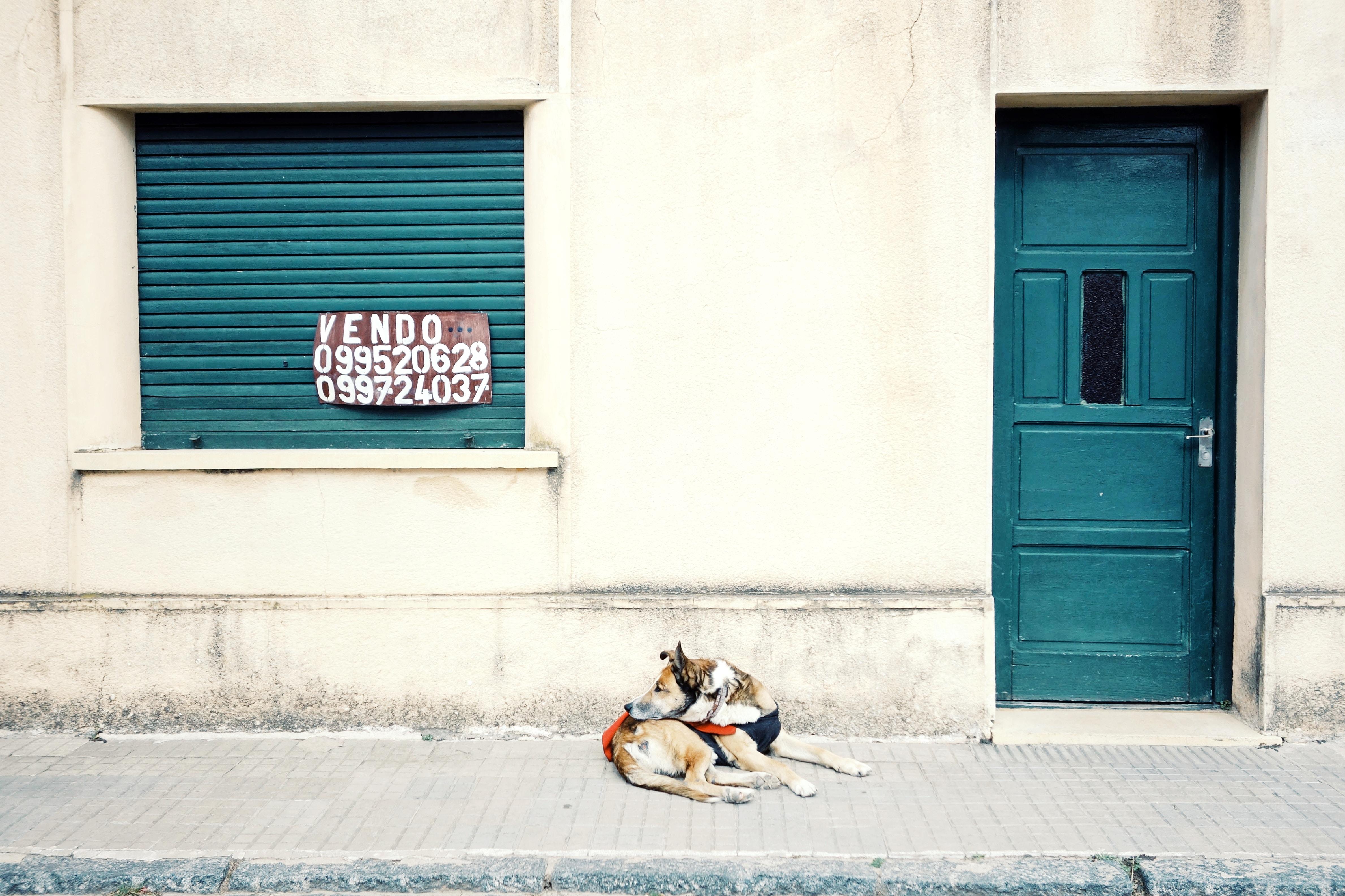 brown lying on sidewalk beside closed blue wooden door