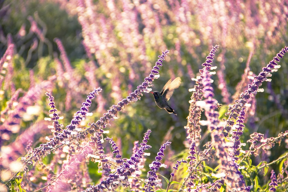 shallow focus photography of black bird surrounded by flowers during daytime