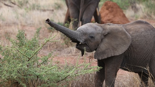 South Africa: the killing and consumption of 90 wildlife species soon to be authorized