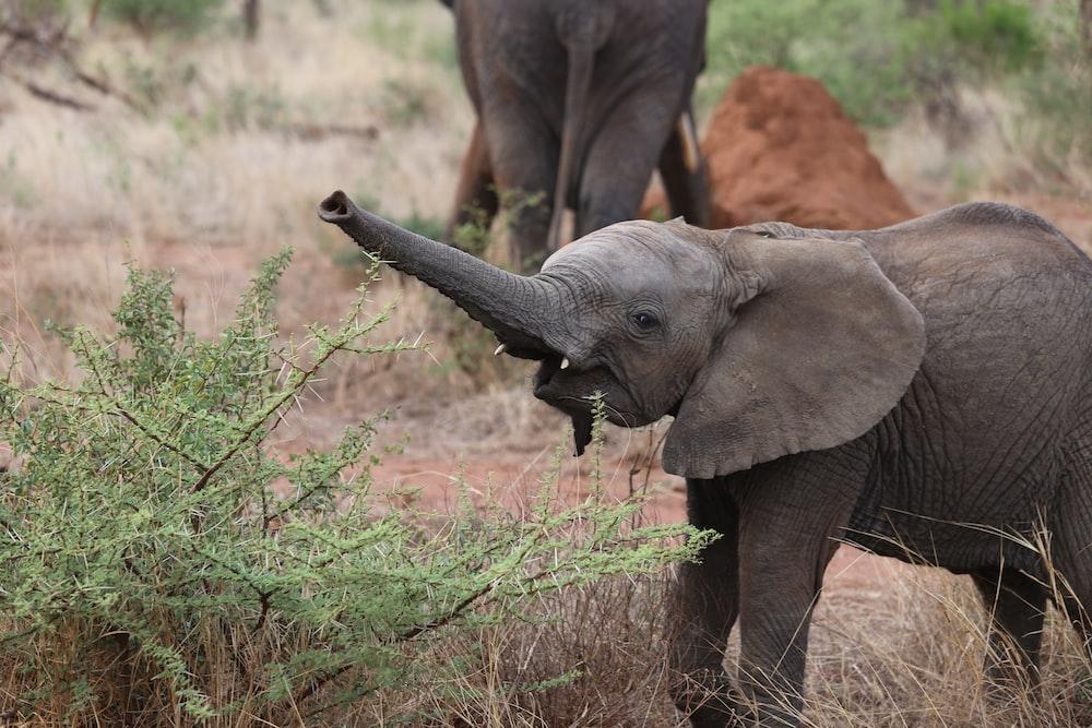 young elephant near green grass