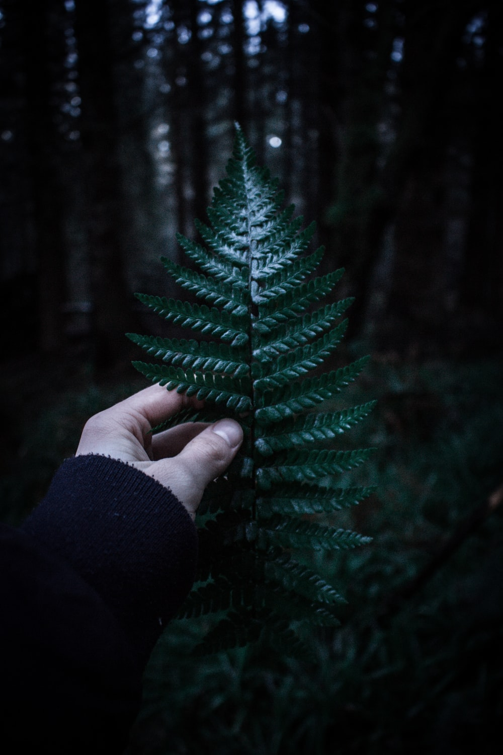 person holding fern with shallow depth field