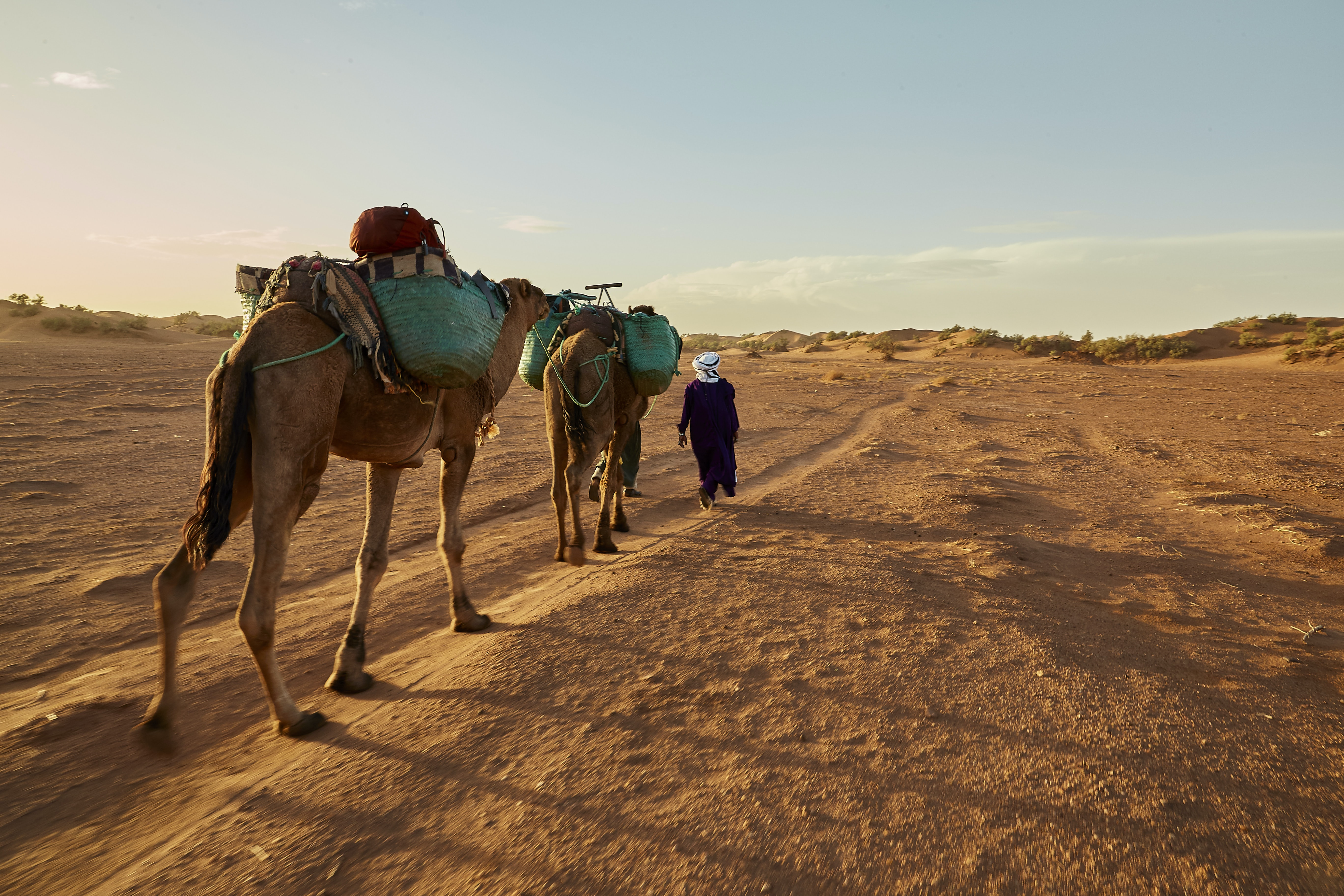 two men with two camels at the desert