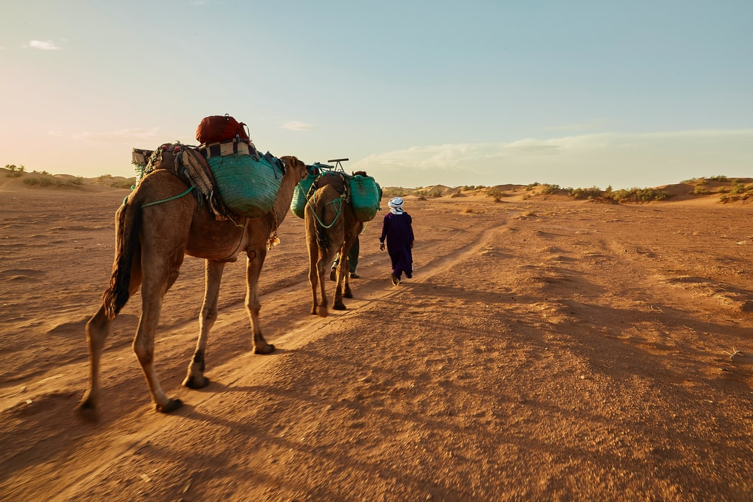 Ali and Muhammed (who is hidden ahead of the camels) are leading the caravan. In a few minutes we will rich our camp for the night: a traditional desert bivouac where we will spend the night sleeping outside and watching the stars.
