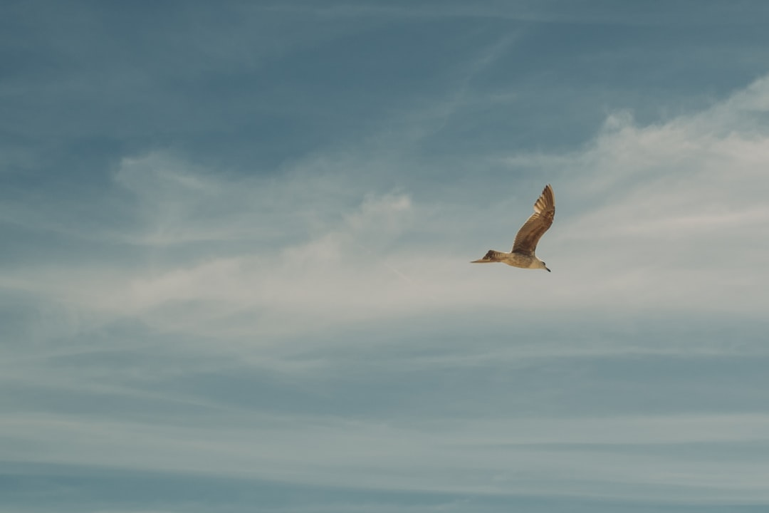 Shot of a bird flying over my head at the beach in Costa de Caparica. Caparica - located in the opposite side of Lisbon along the Tago river - is a famous spot for surfers, mainly beginners, in Portugal.