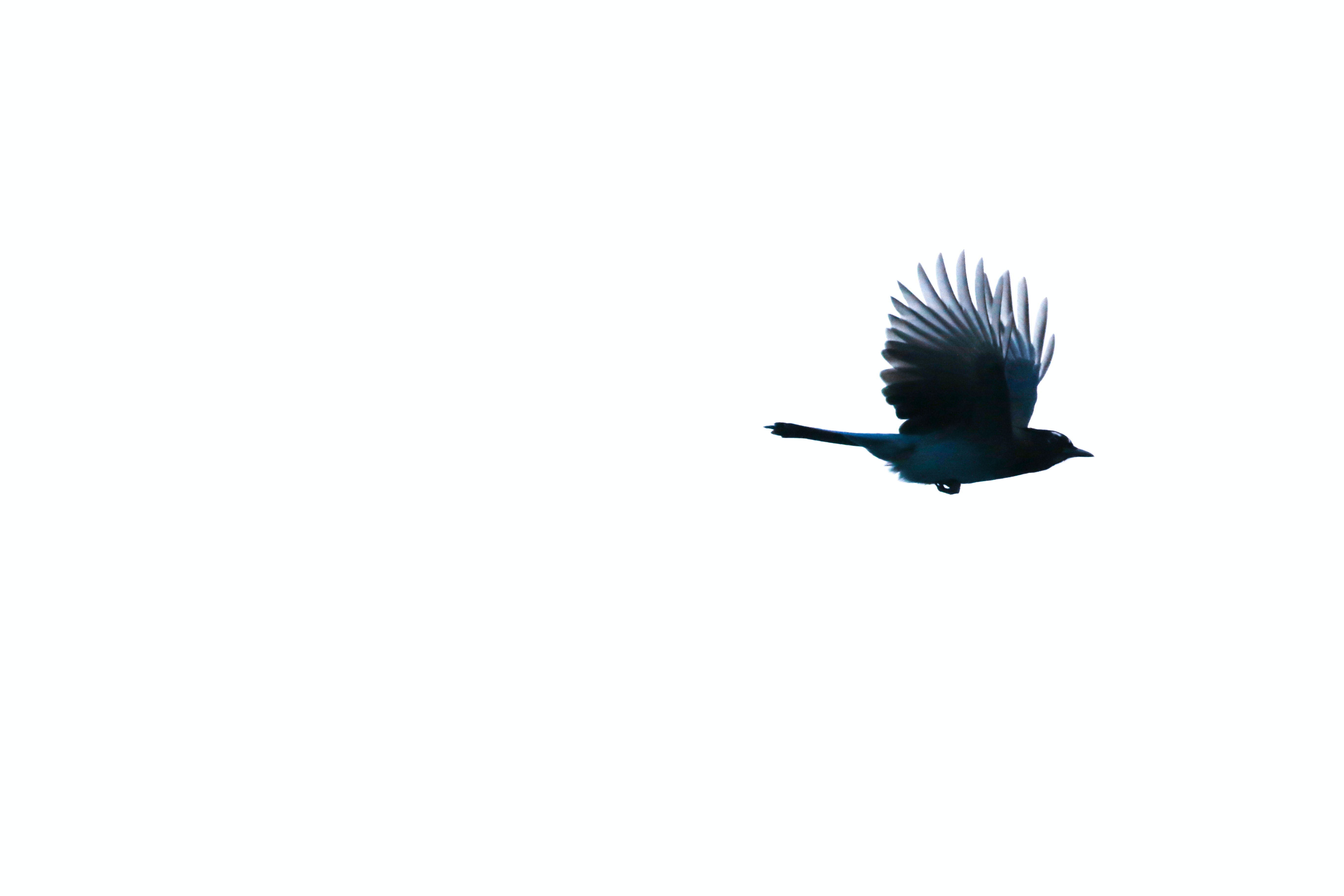 close-up photo of blue bird