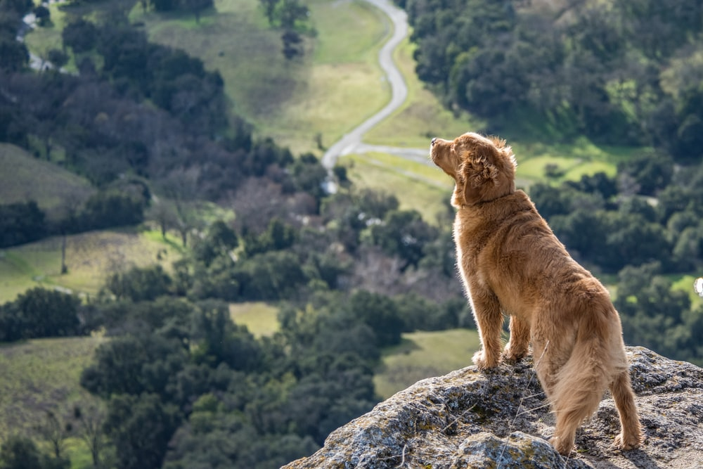 short-coated brown dog on gray cliff