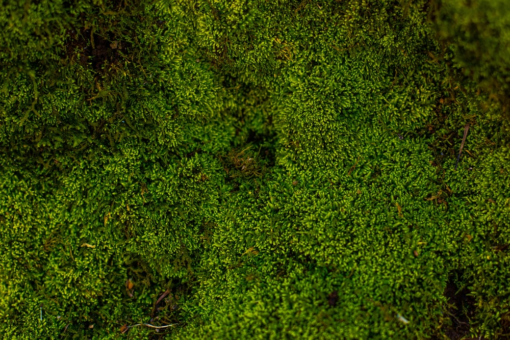 aerial photography of forest trees
