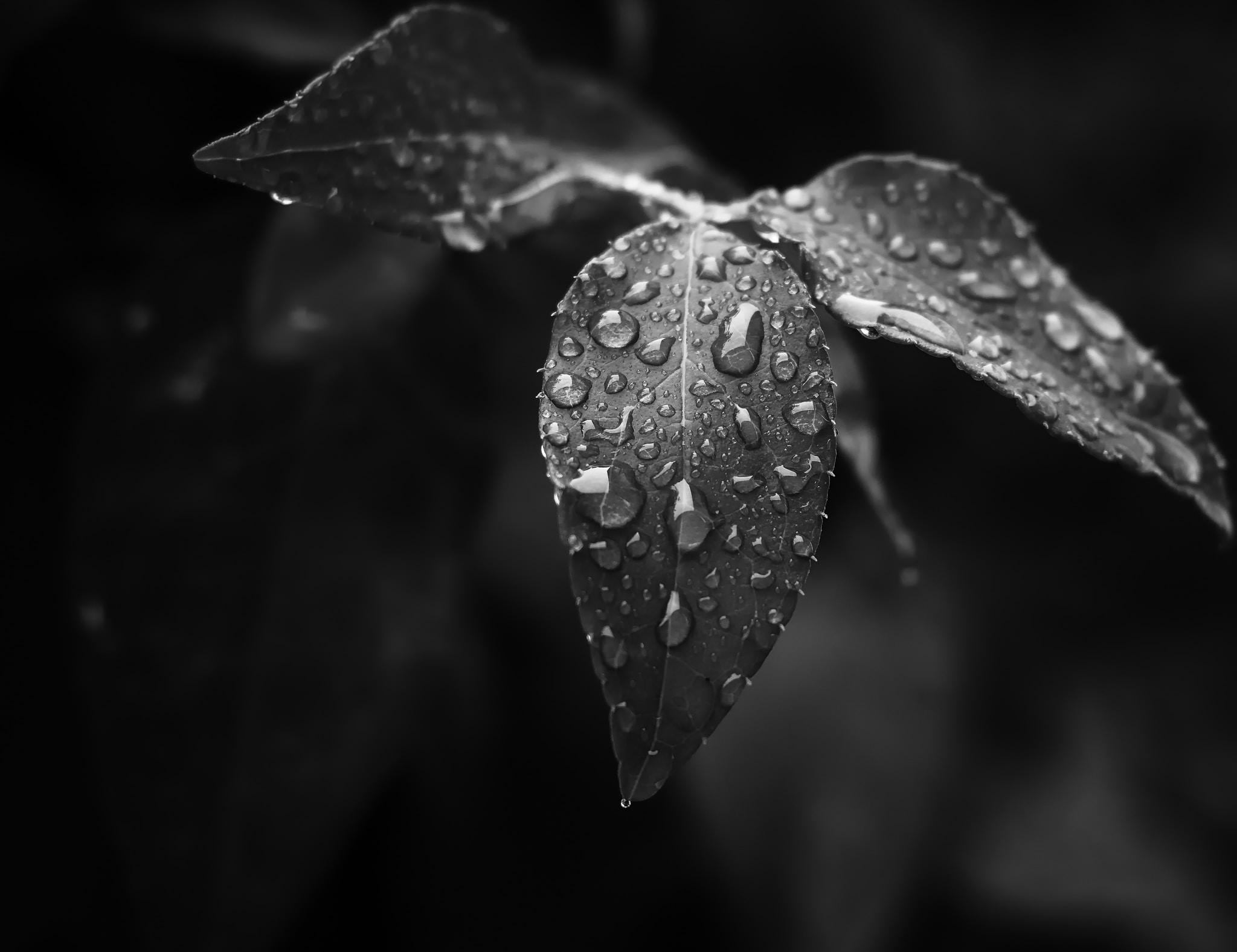 Rain storm stories