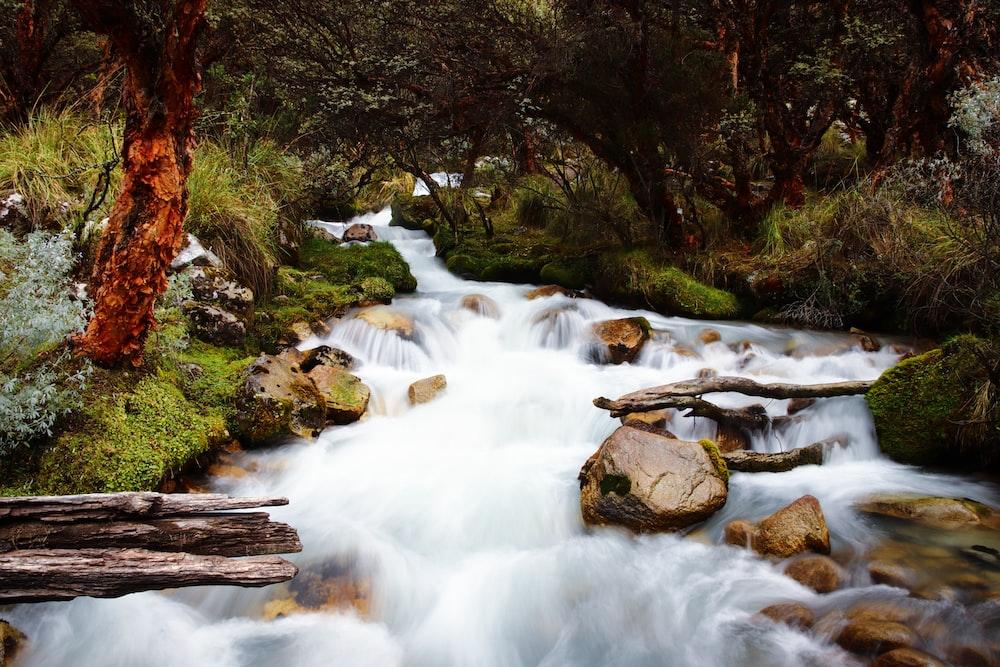 water stream near trees