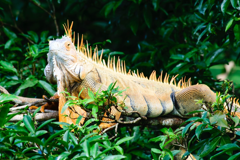 photo of beige bearded dragon on green leafed plant