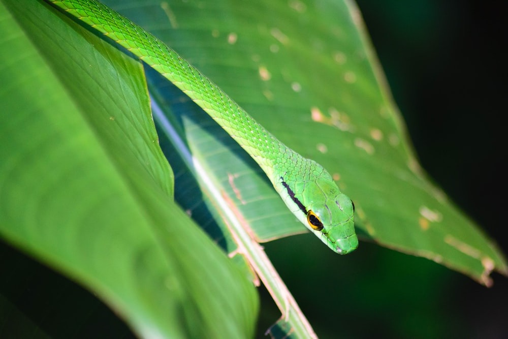 closeup photography of green snake