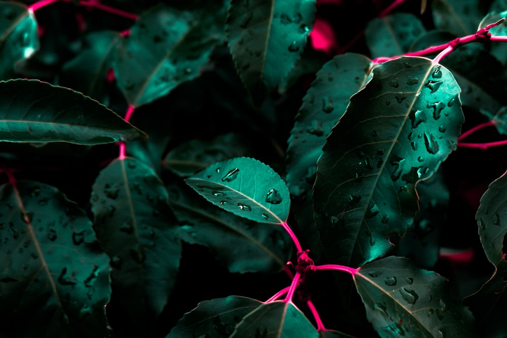 green leafed plant with droplets of water
