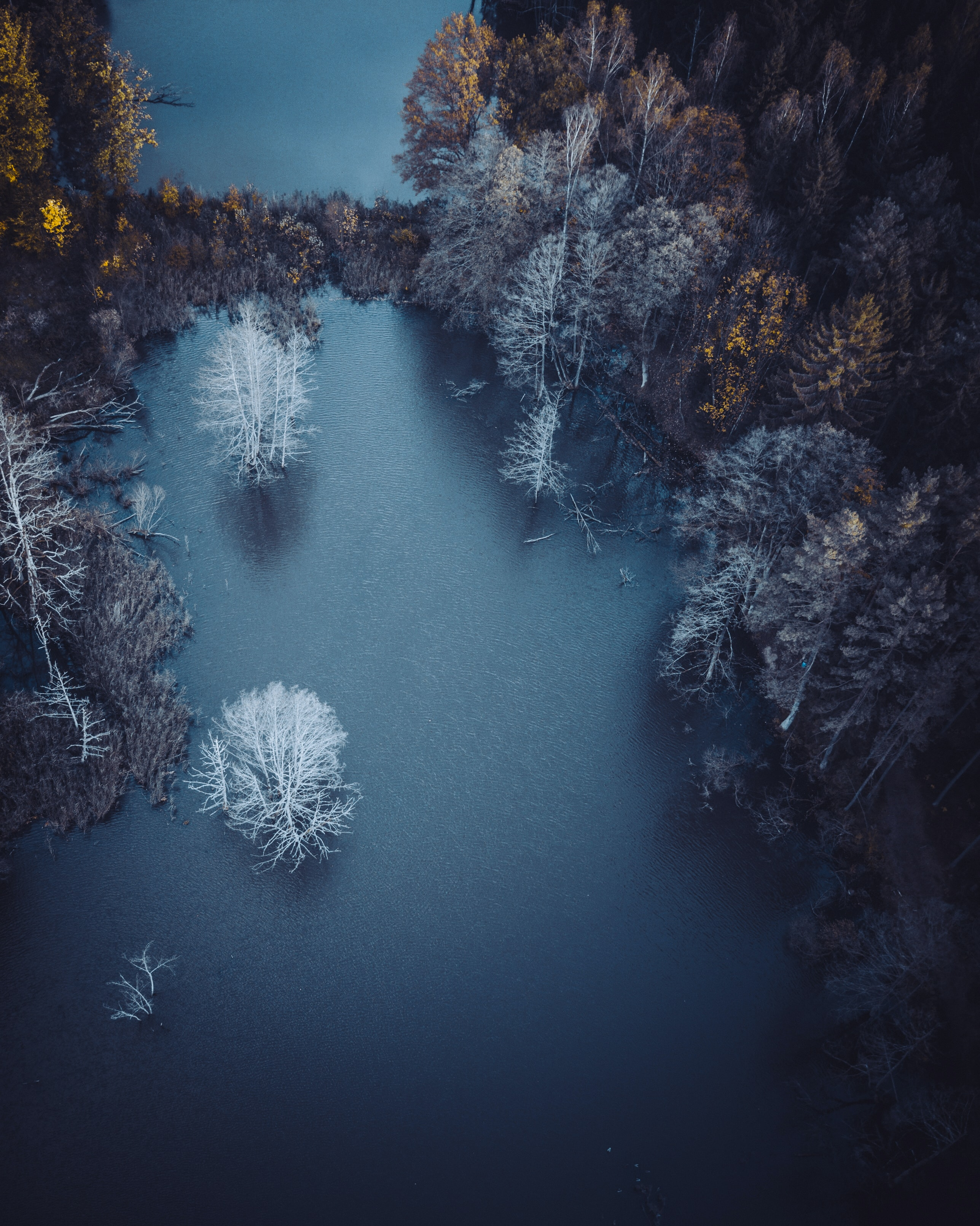 aerial view of body of water near trees