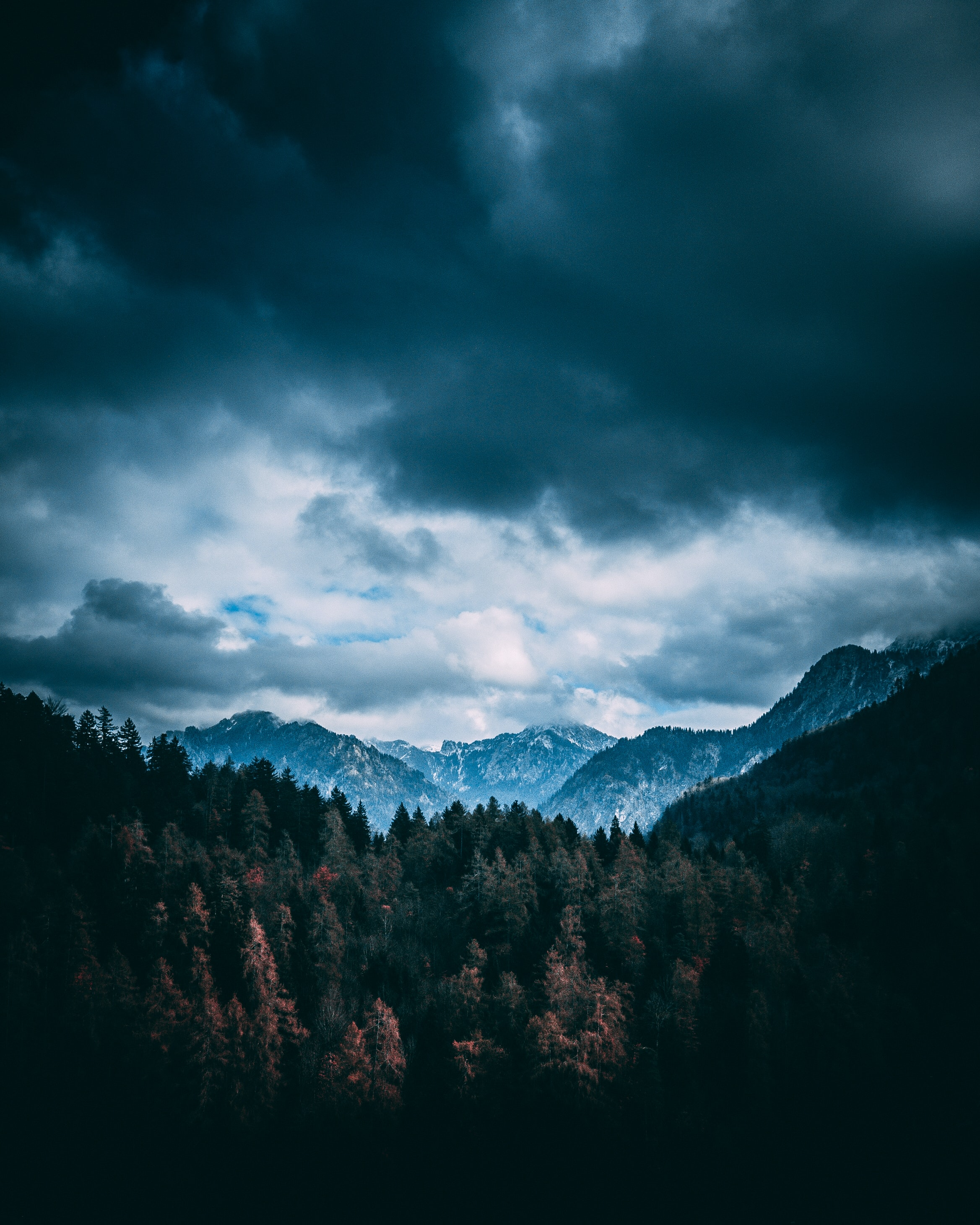 forest and mountains under gray clouds