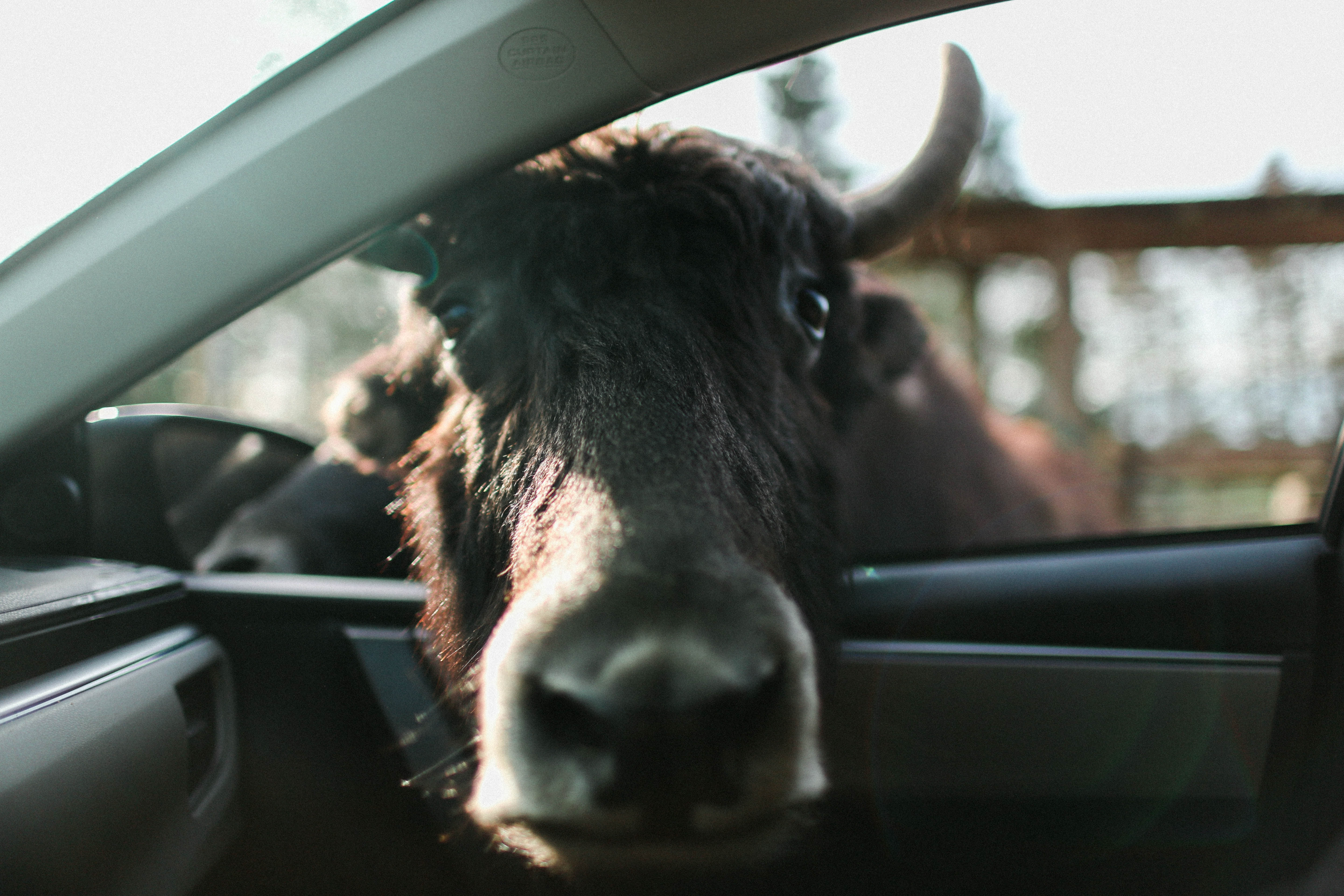 brown animal head inside car