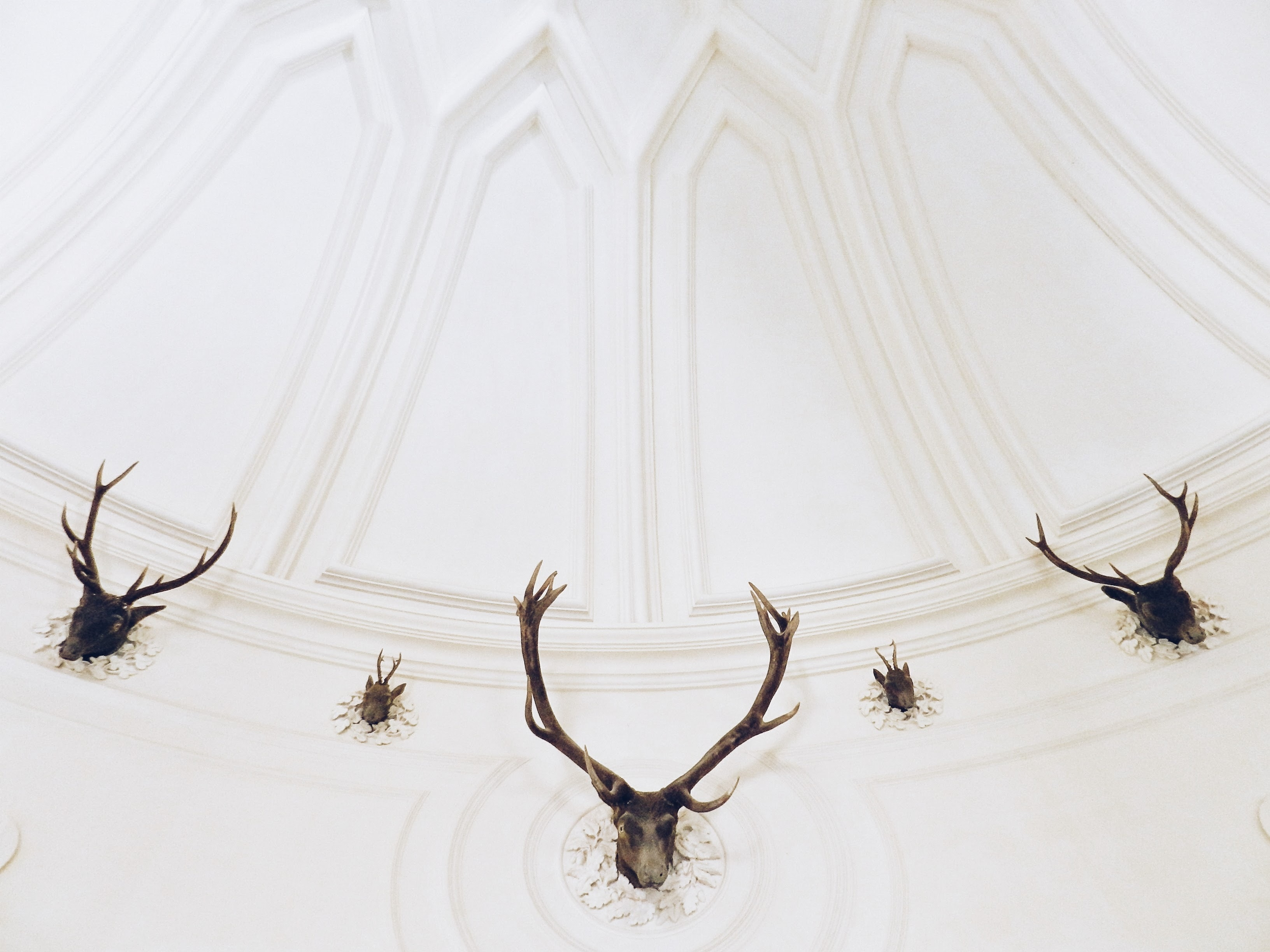 five black deer head taxidermies on white wall