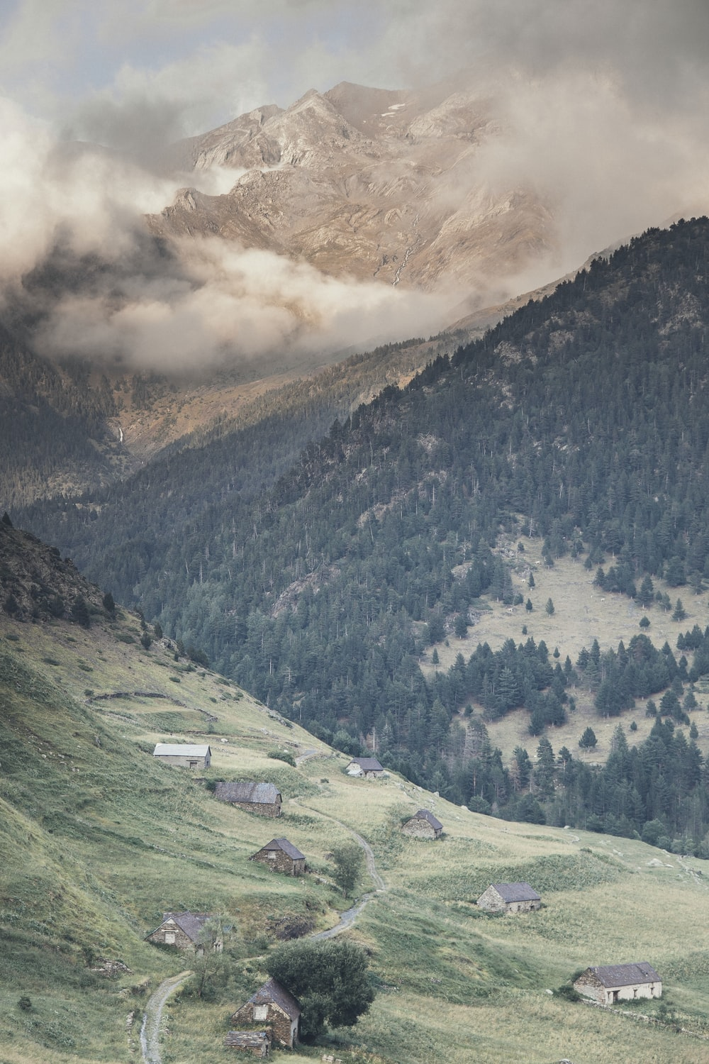 green mountains and pine trees at daytime