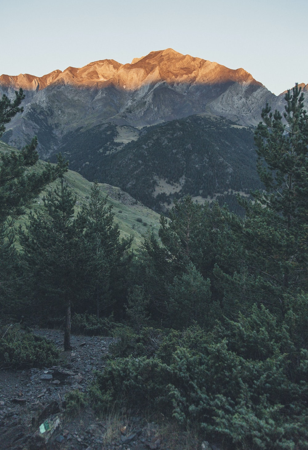 green leafed trees near mountain during daytim