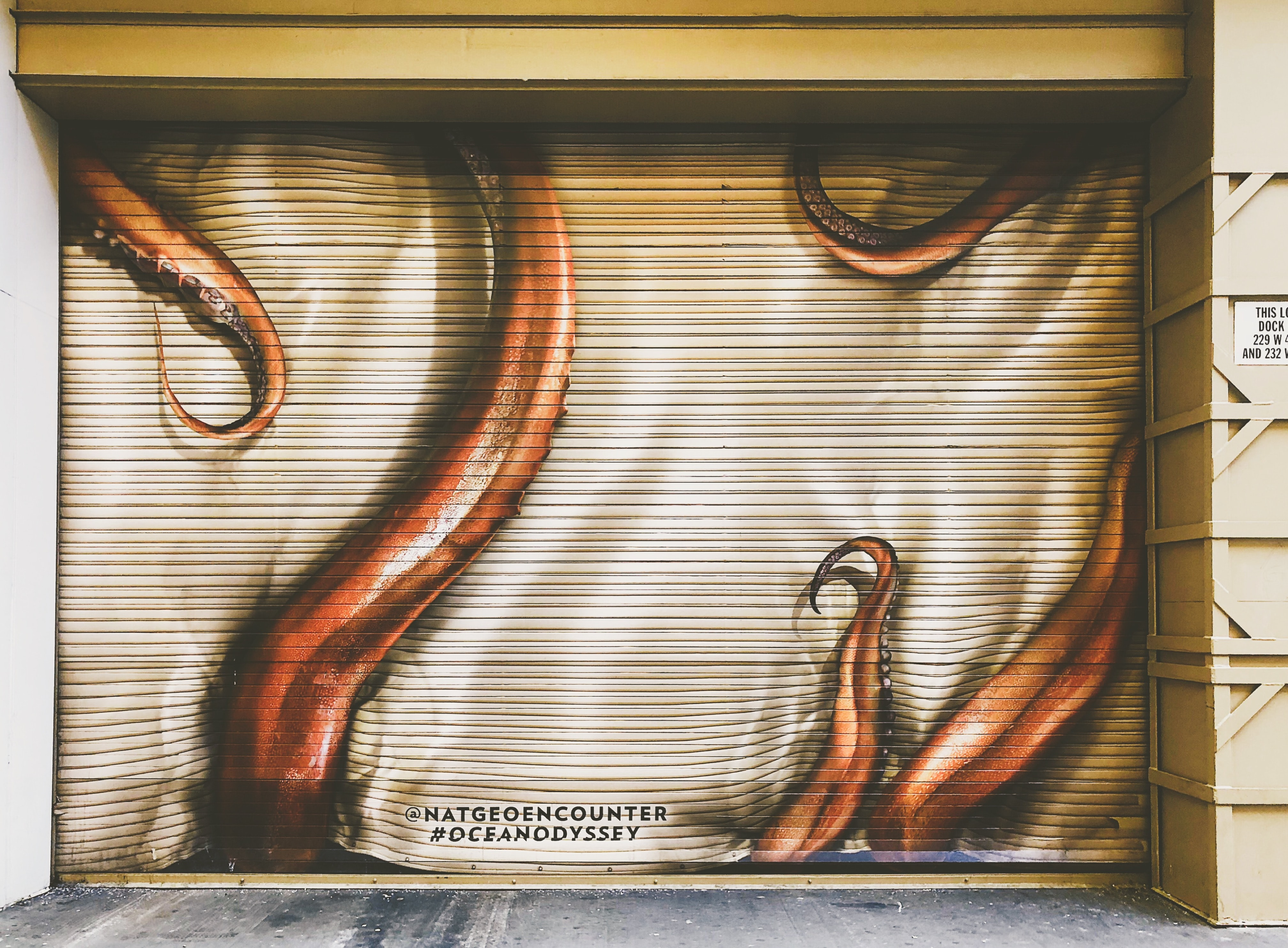 red and white octopus tentacles-printed shutter door