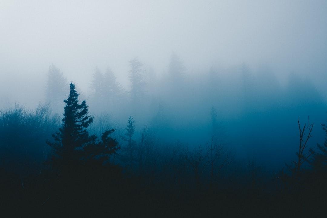 Pale Morning
