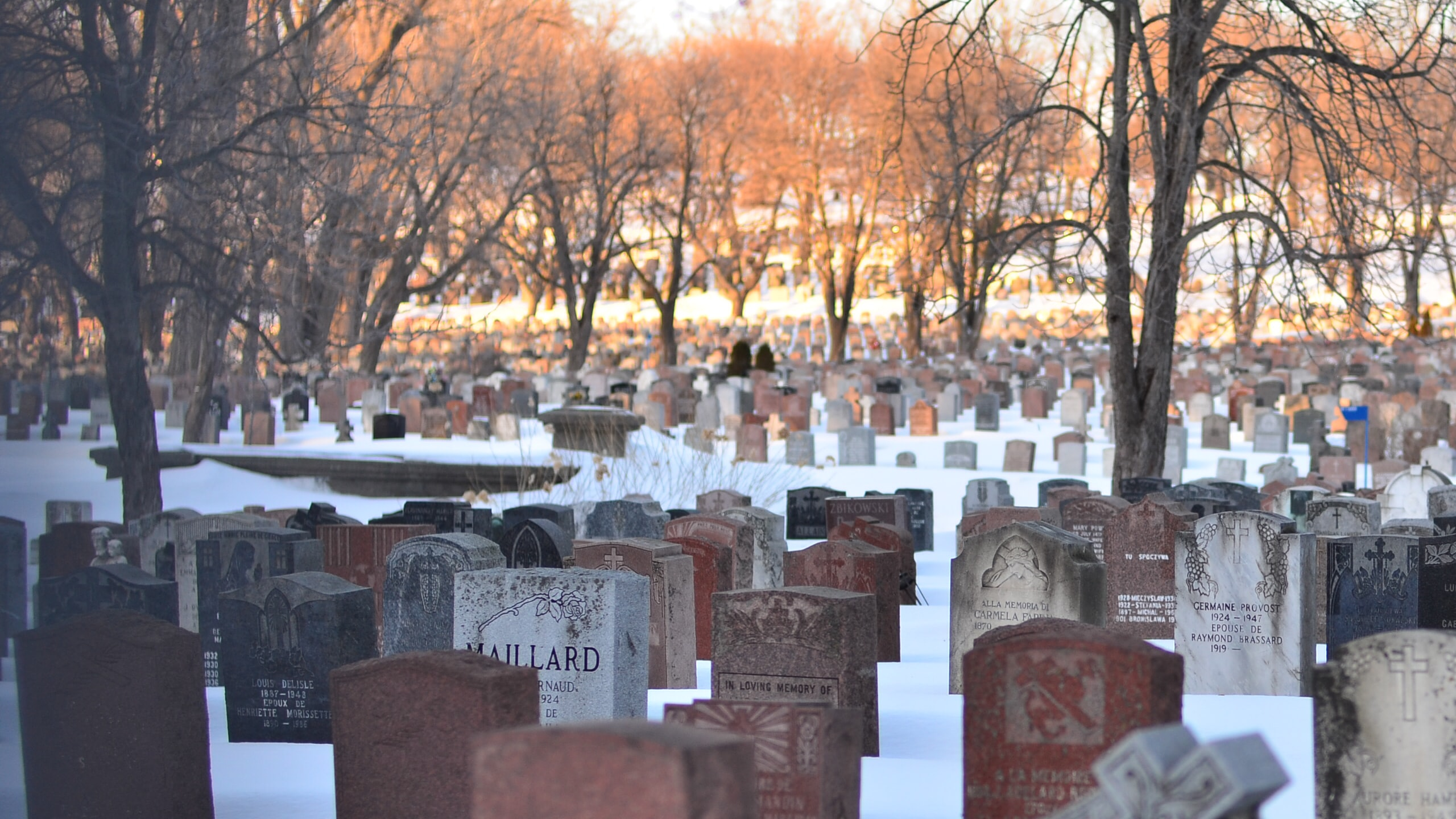 cemetery with trees under white sky