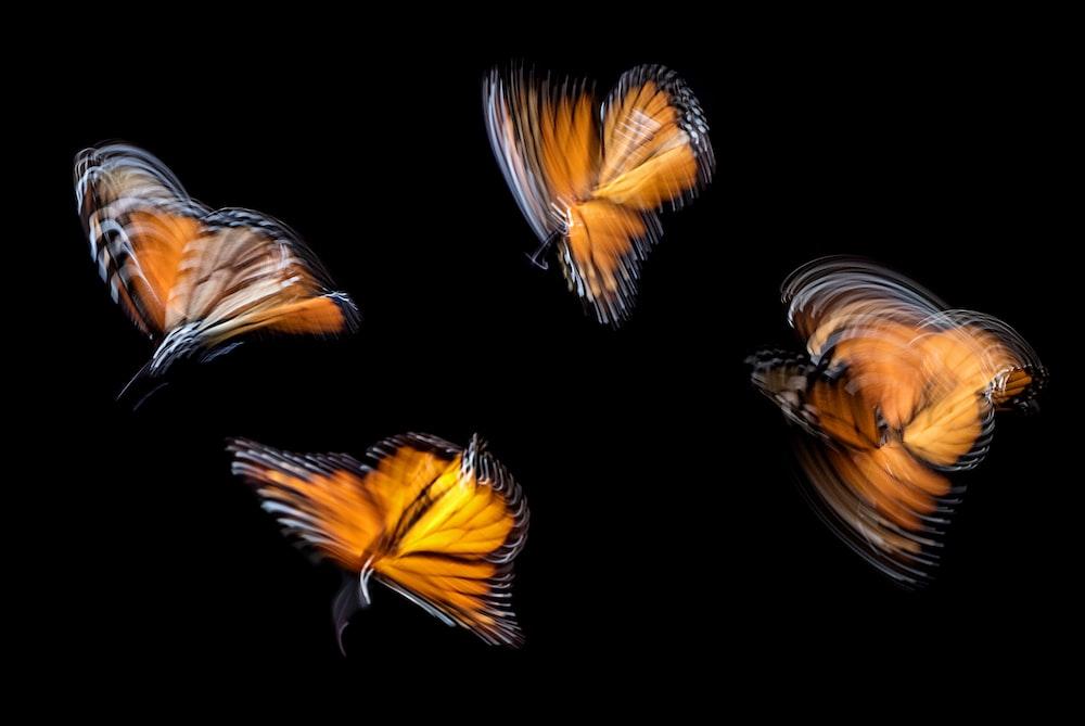 four brown butterflies