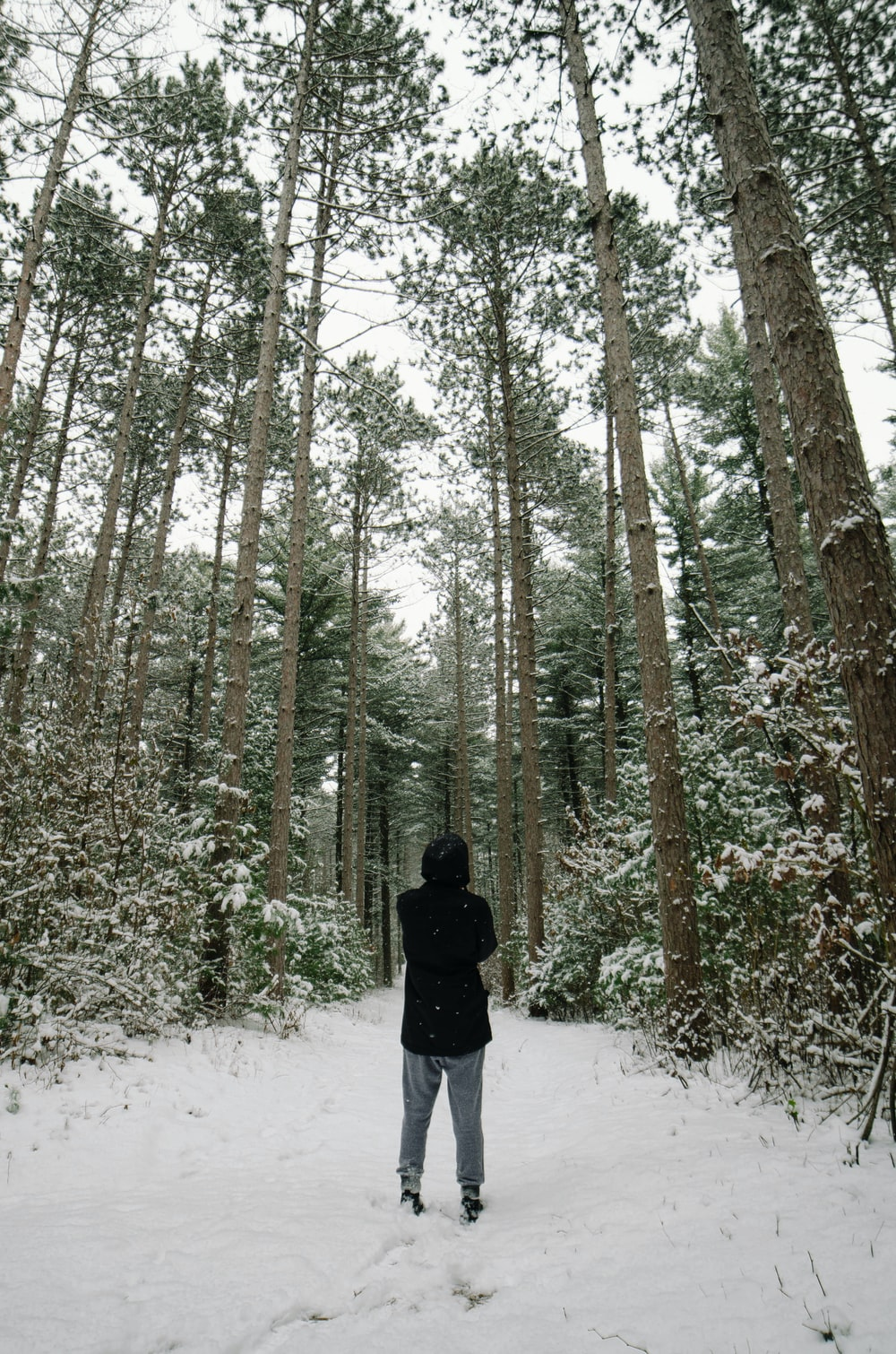 person standing in snow covered forest