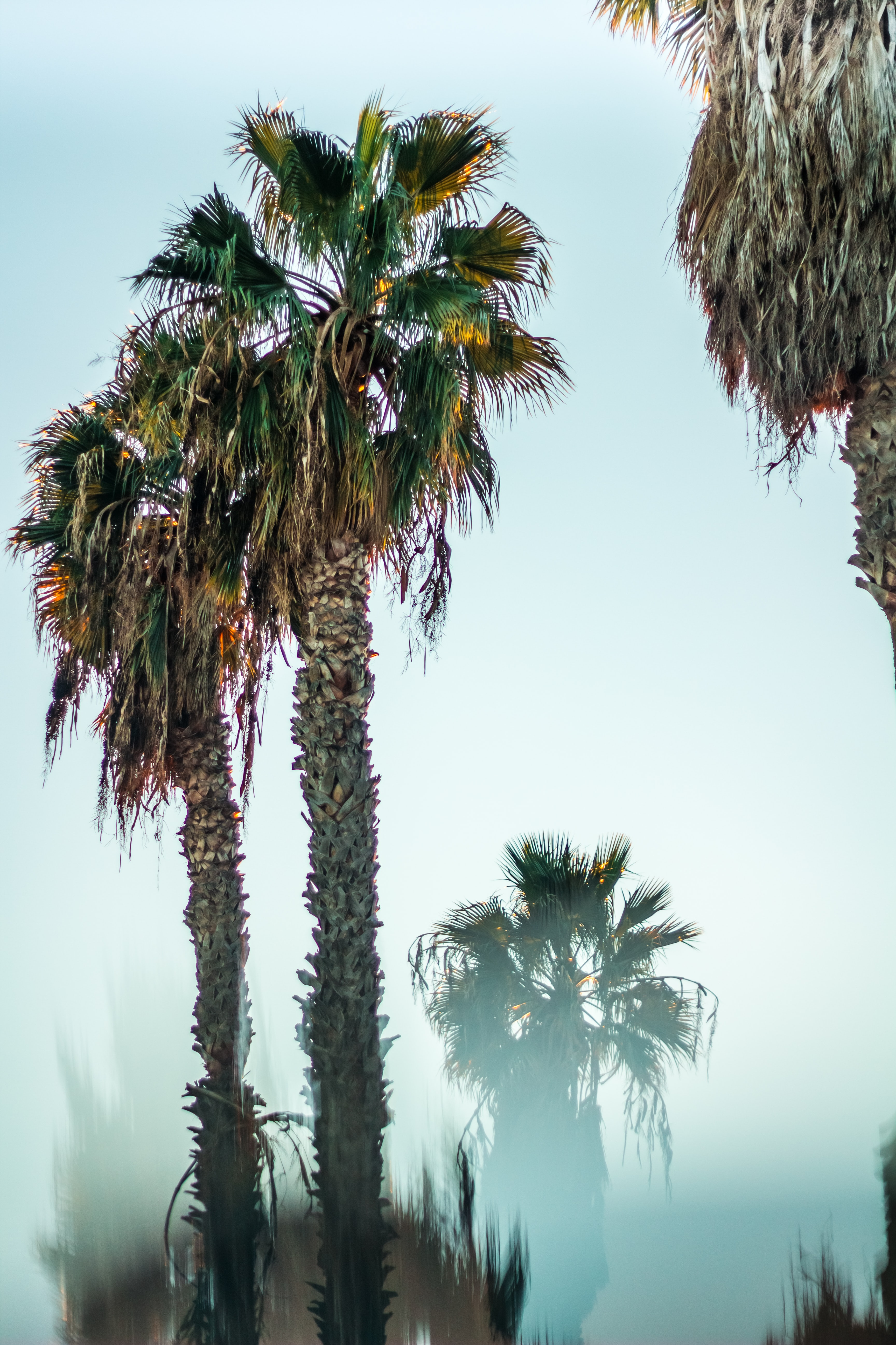 low angle photography of green palm trees under blue sky at daytime