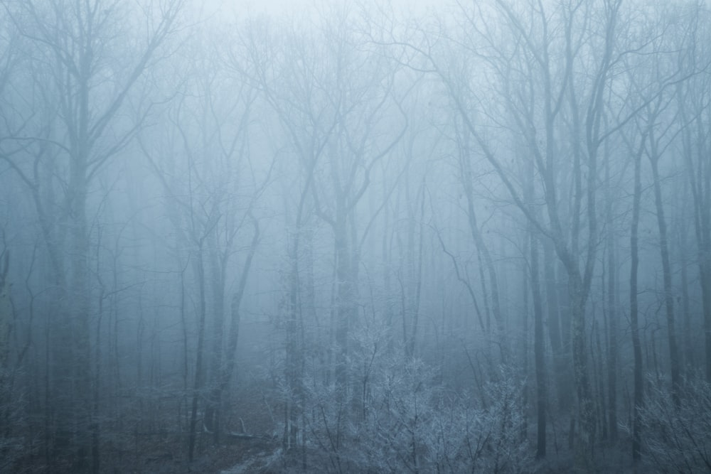 landscape photography of leafless trees with fogs
