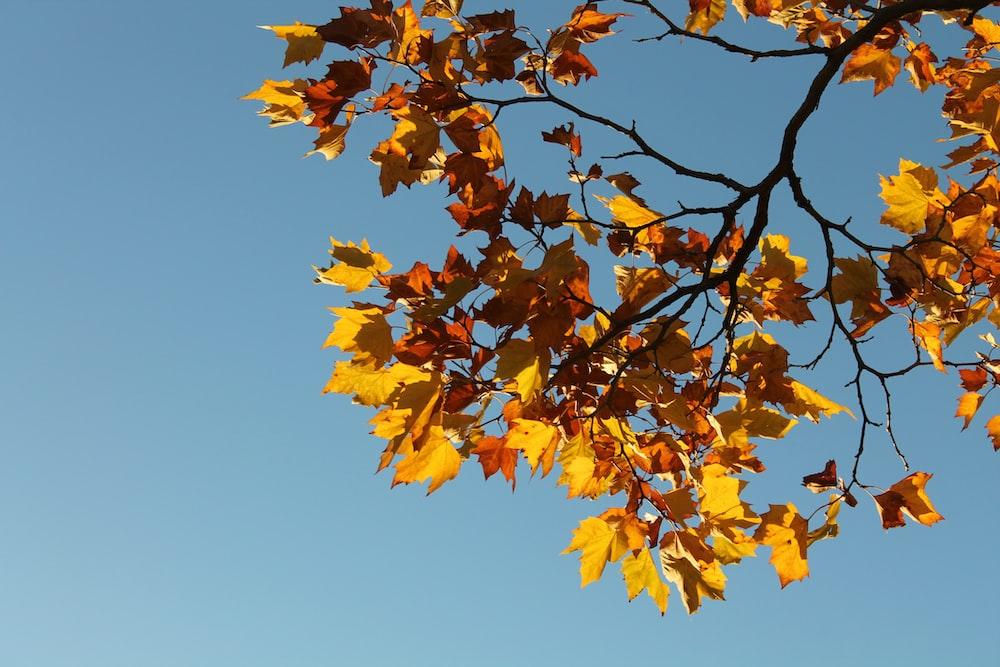 low angle photo of yellow leaf tree