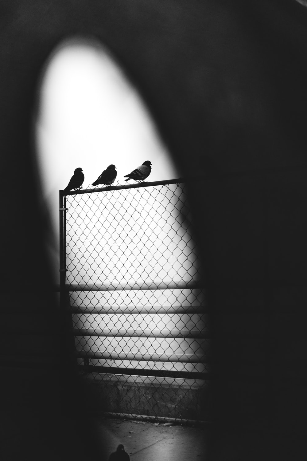 grayscale photography three pigeons