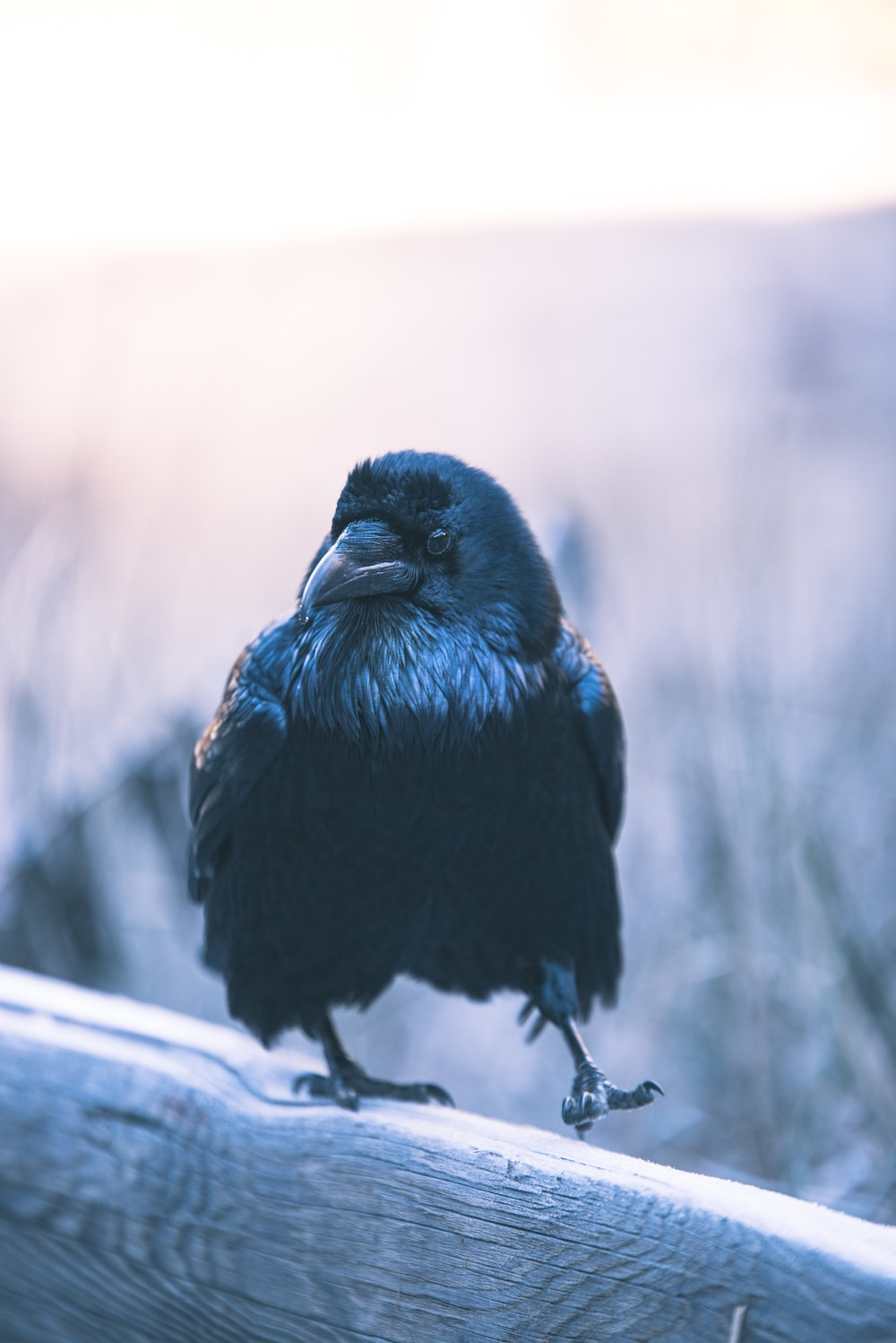 selective focus photography of crow perching on wood
