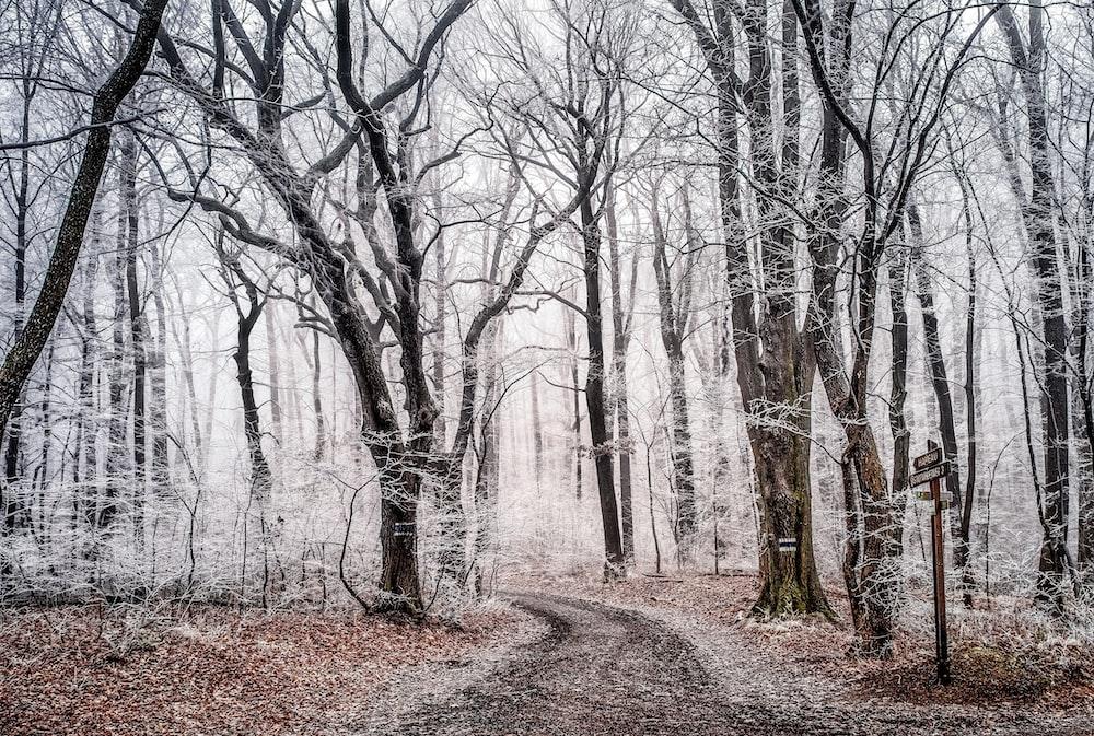 leafless trees