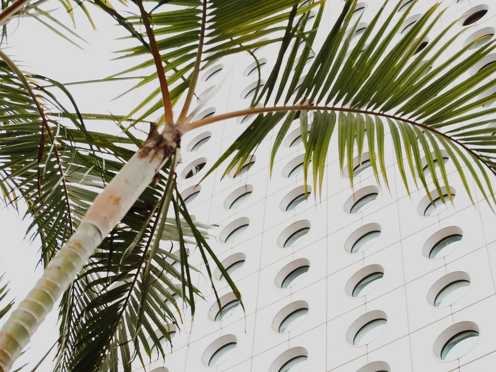green palm tree near building