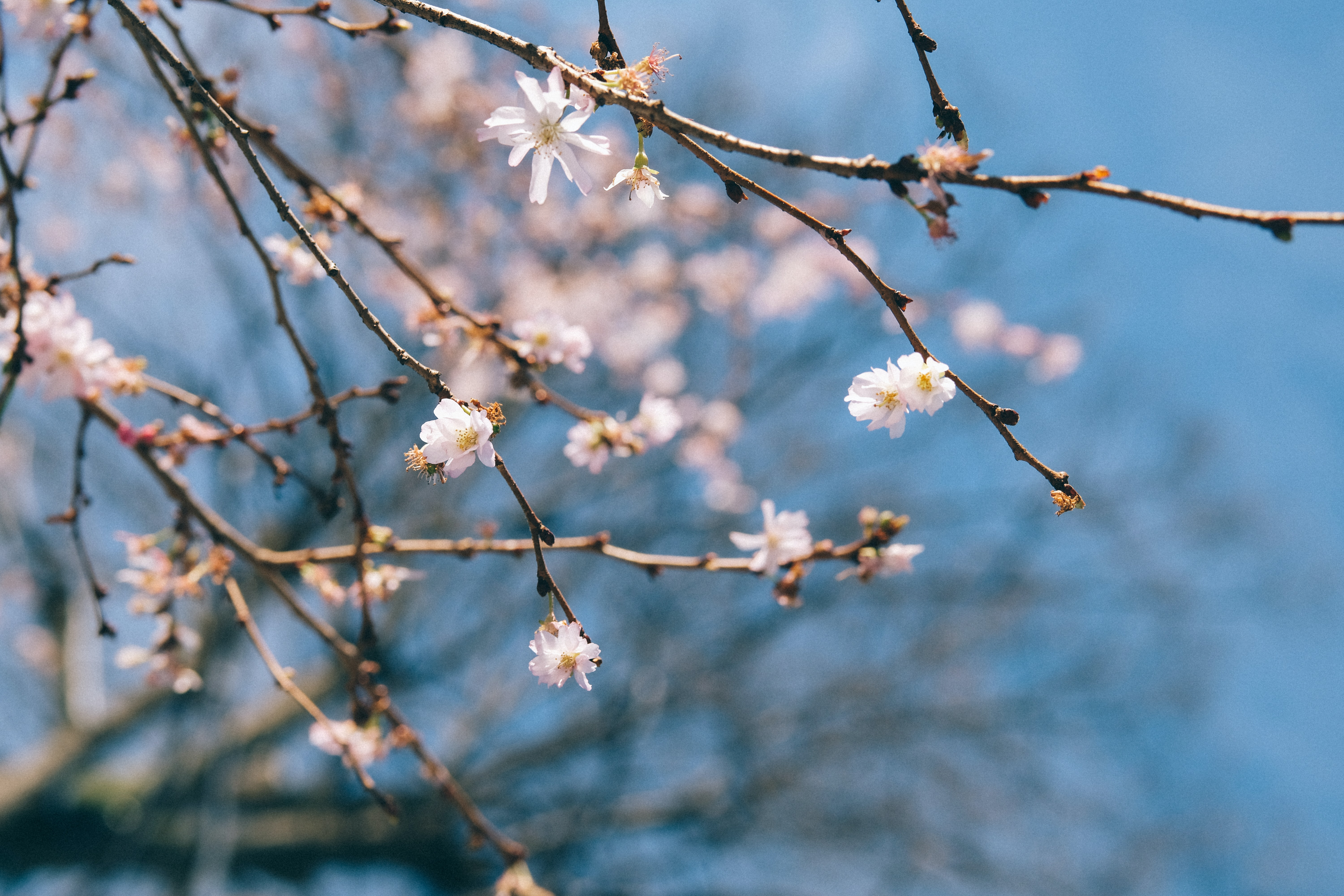 selective focus photography white petaled flowering tree