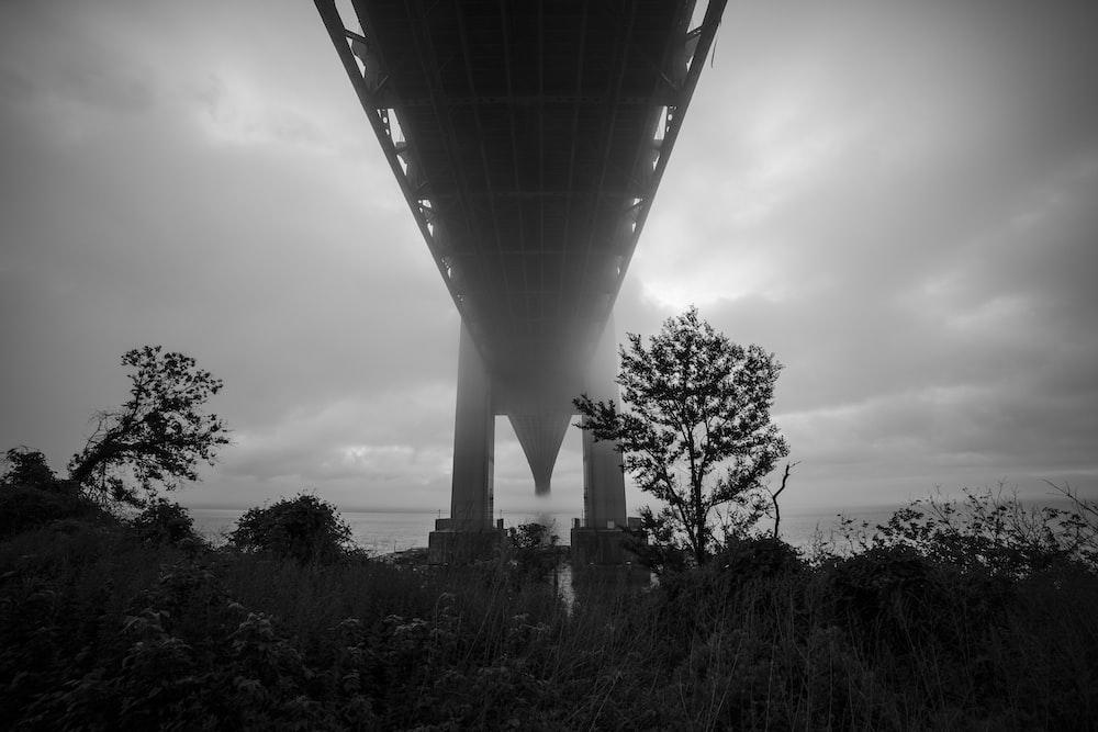tree under the bridge