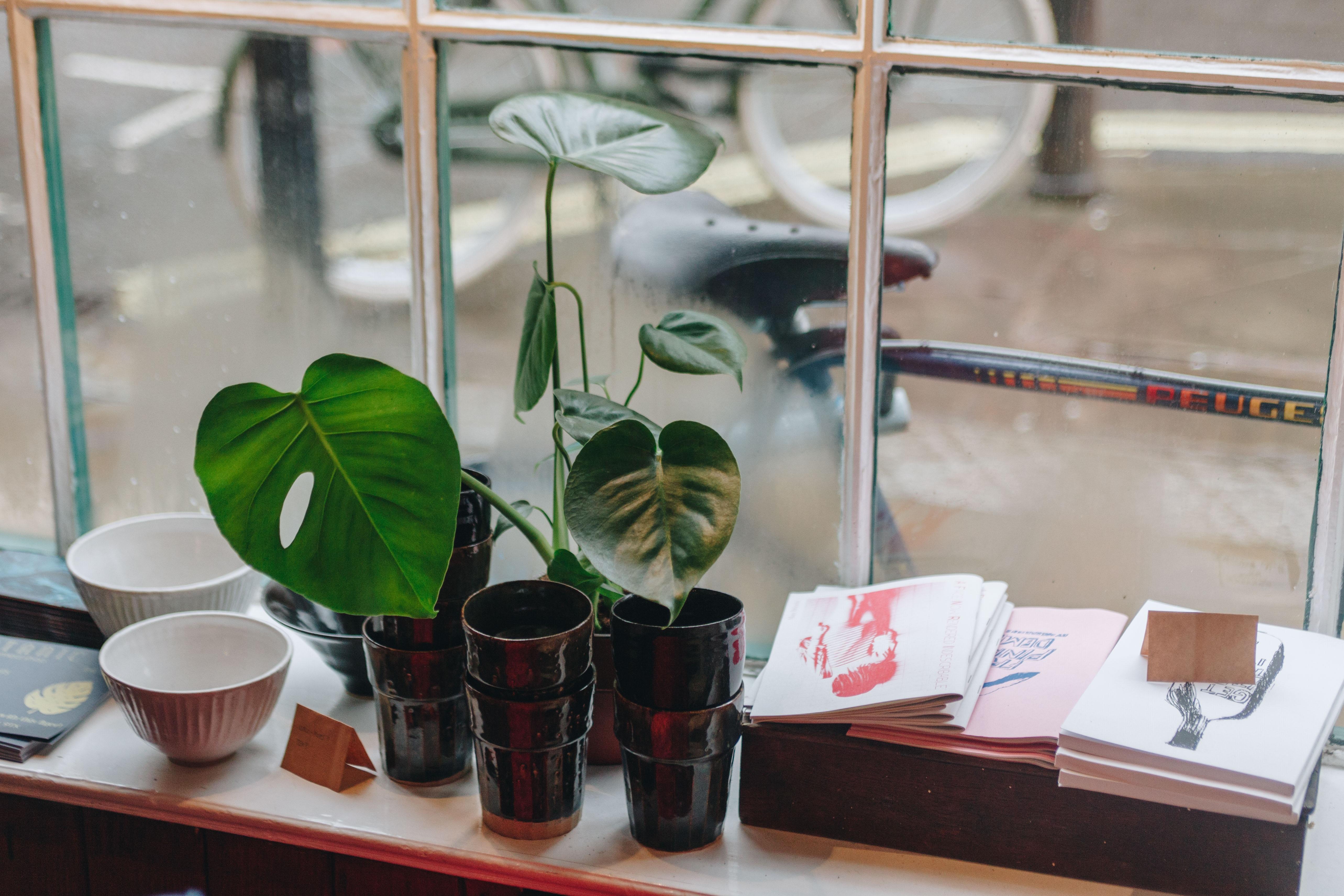 green plants beside white ceramic bowls