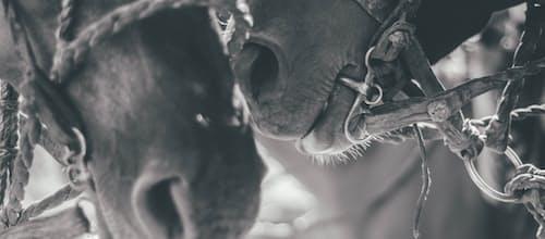 אנשים, בעלי חיים ותהליכים בין-אישיים לא מודעים: אינטר-סובייקטיביות בקשר אדם-חיה בטיפול הנעזר בבעלי חיים ומעבר לו