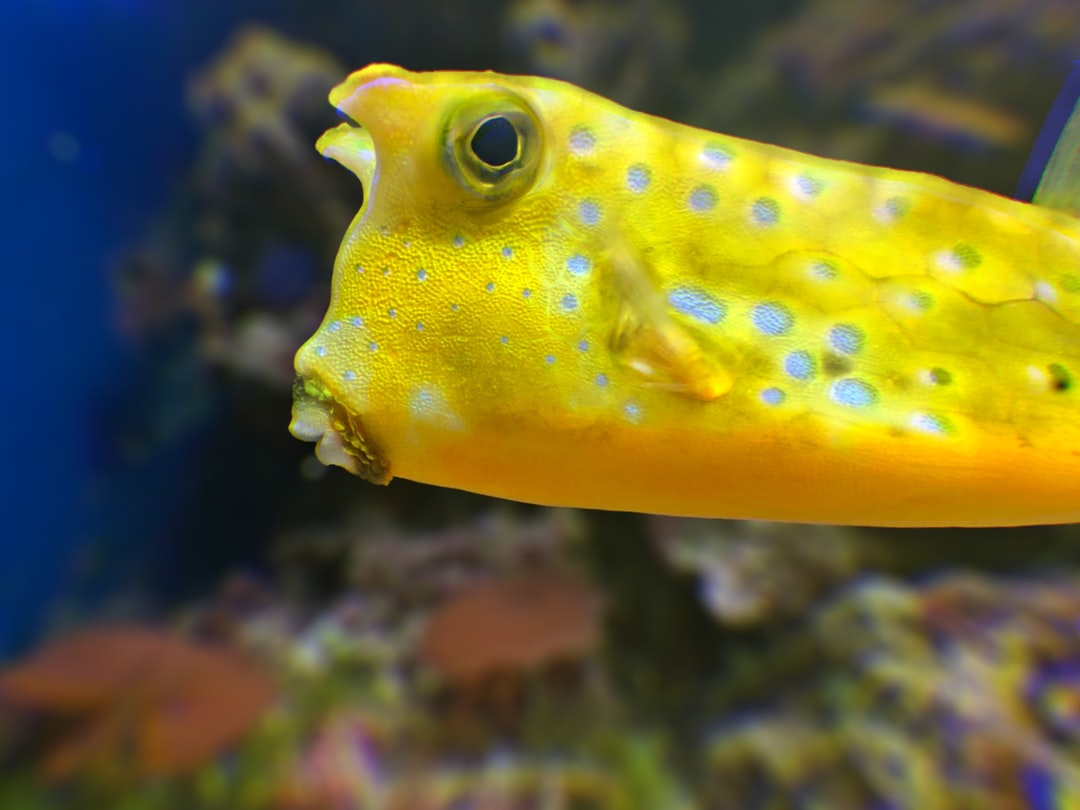 Little funny yellow fish on a blue background of the sea