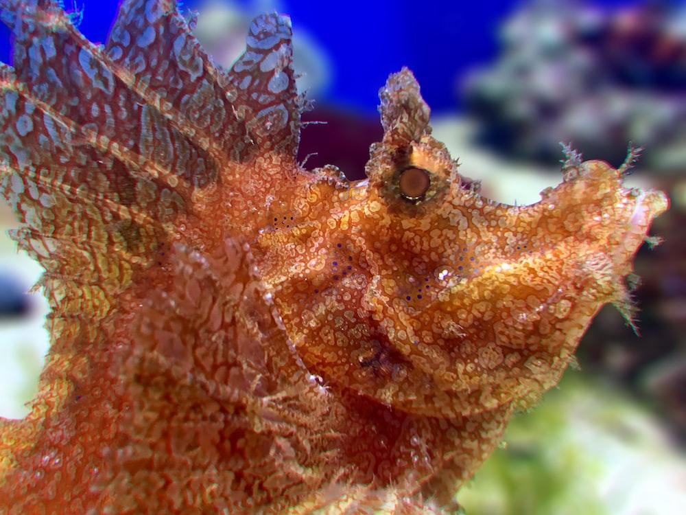 selective focus of brown sea creature