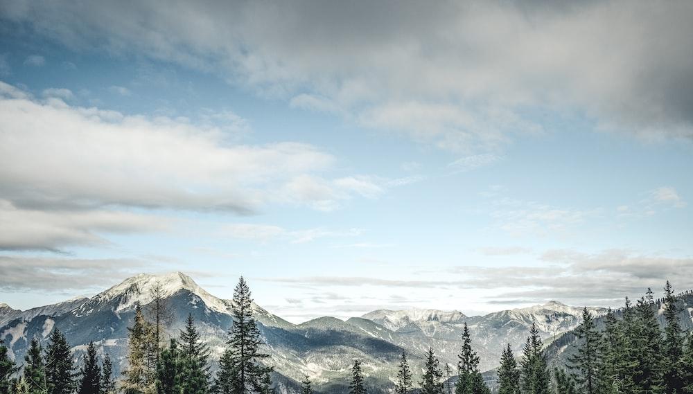 tall trees near mountain under white sky