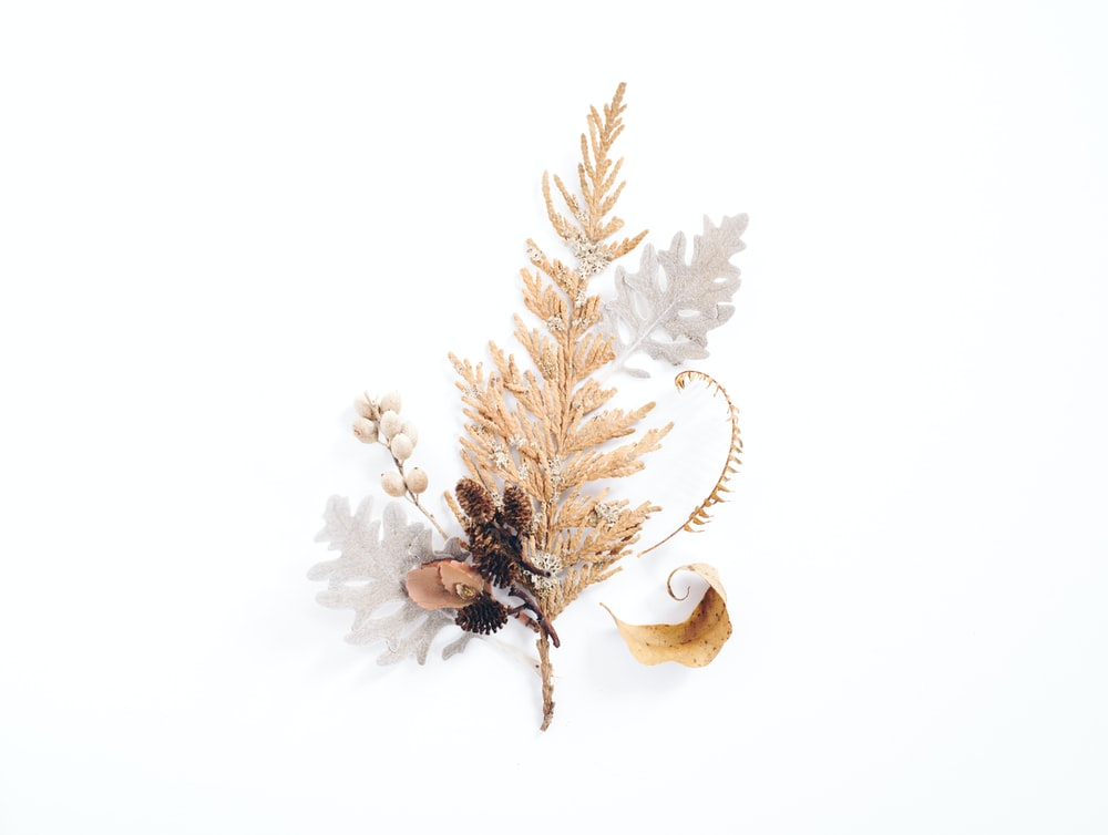 gold leaf decor in white background