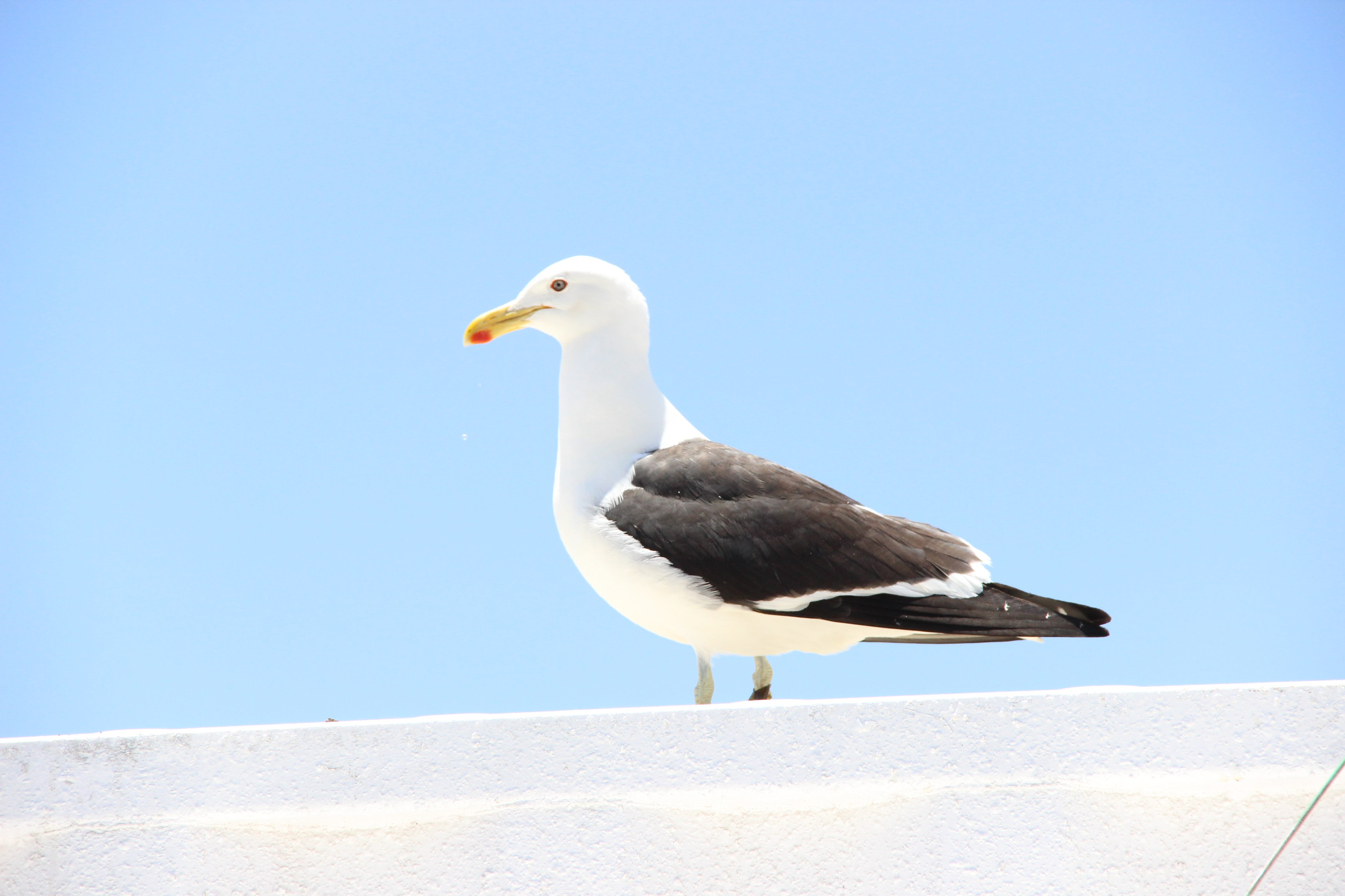 white and black seagull on white roof