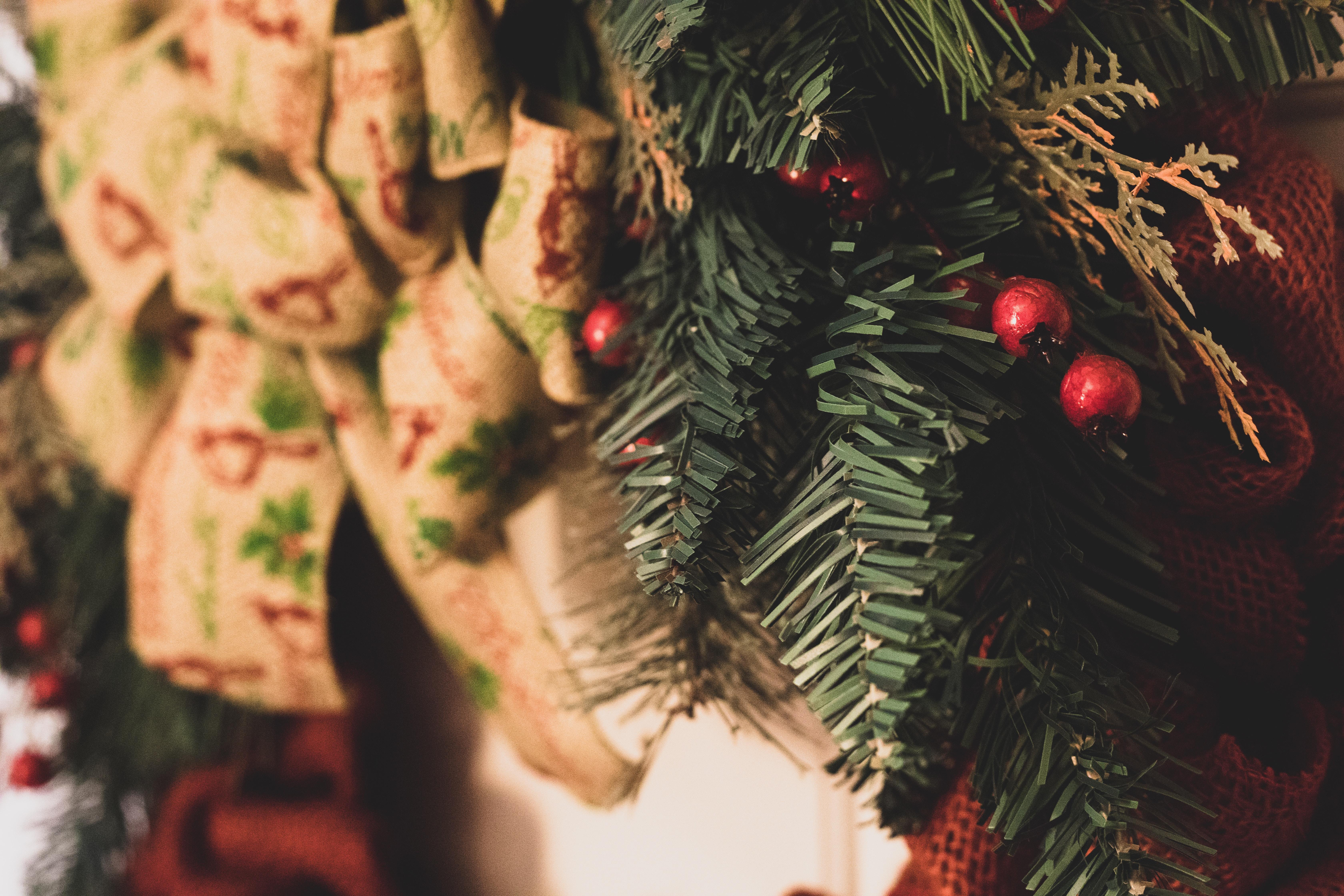 closeup photography of mistletoe