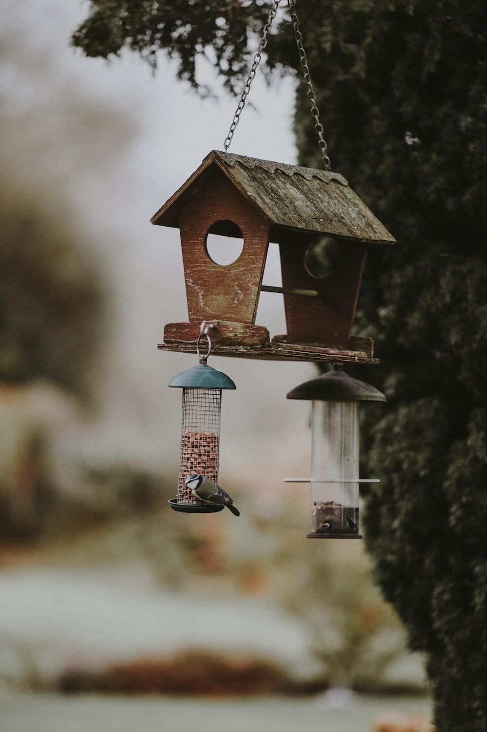 hanging brown bird house