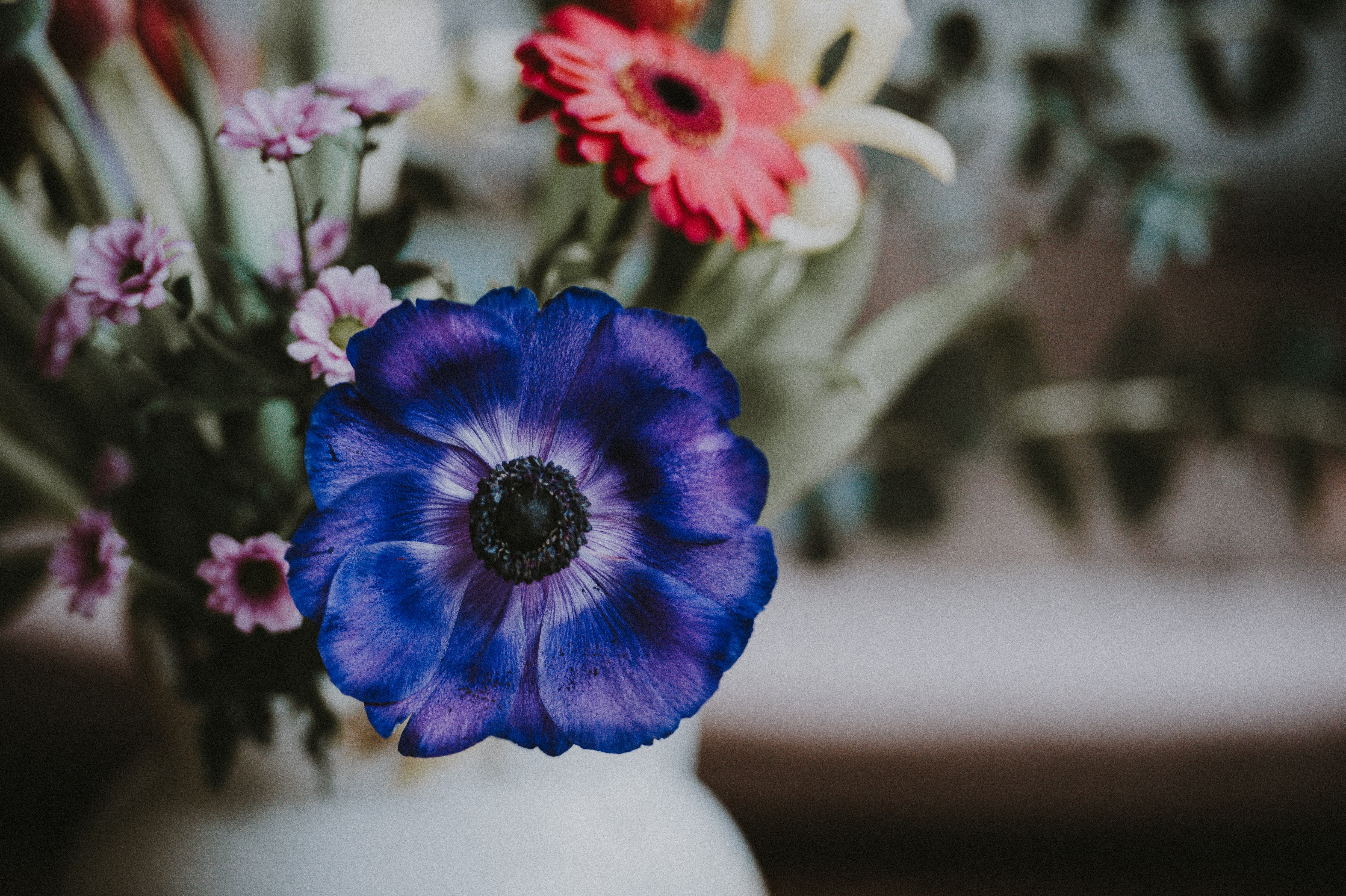 selective focus photography of blue petaled flower