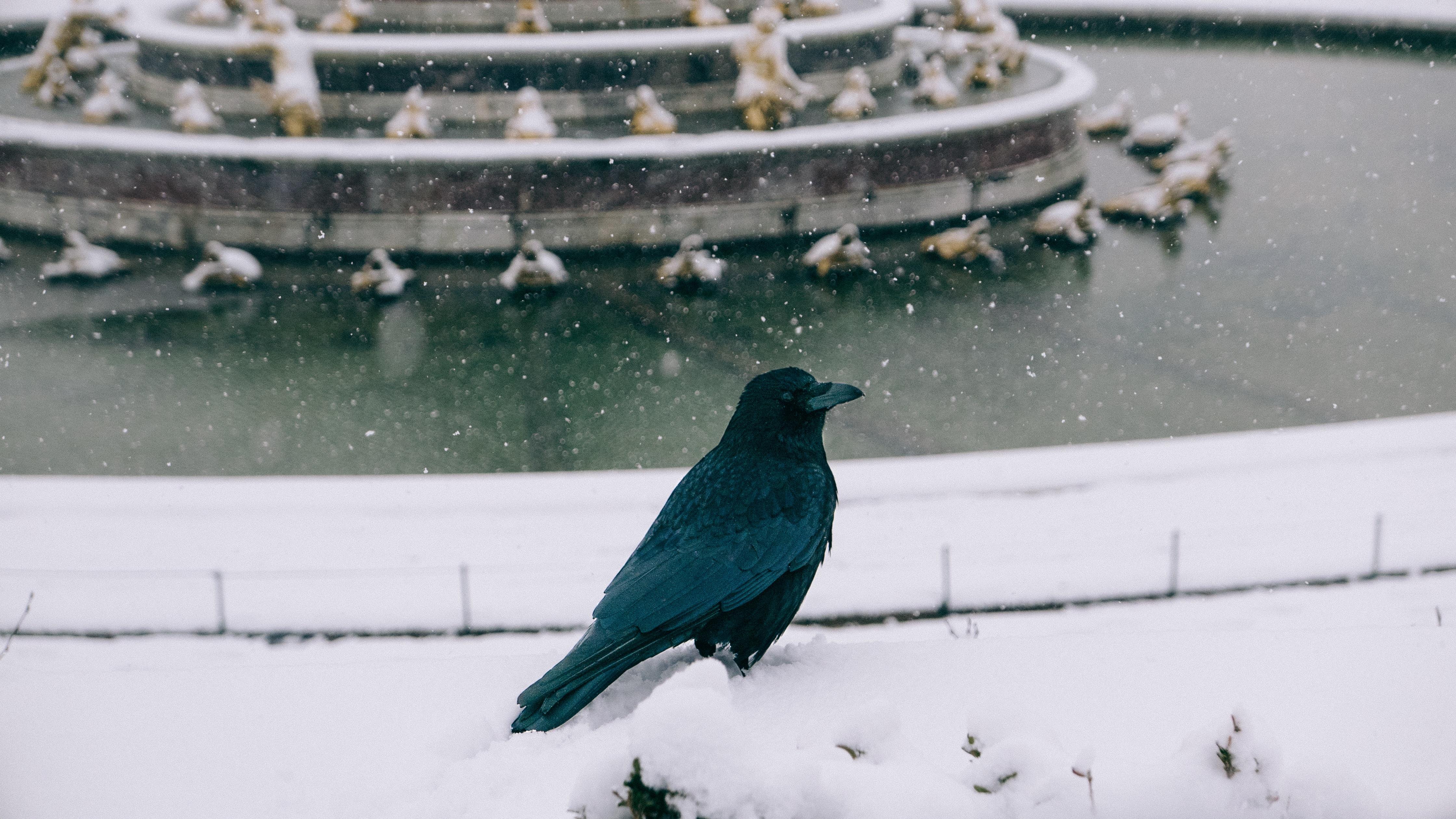 black bird on white surface