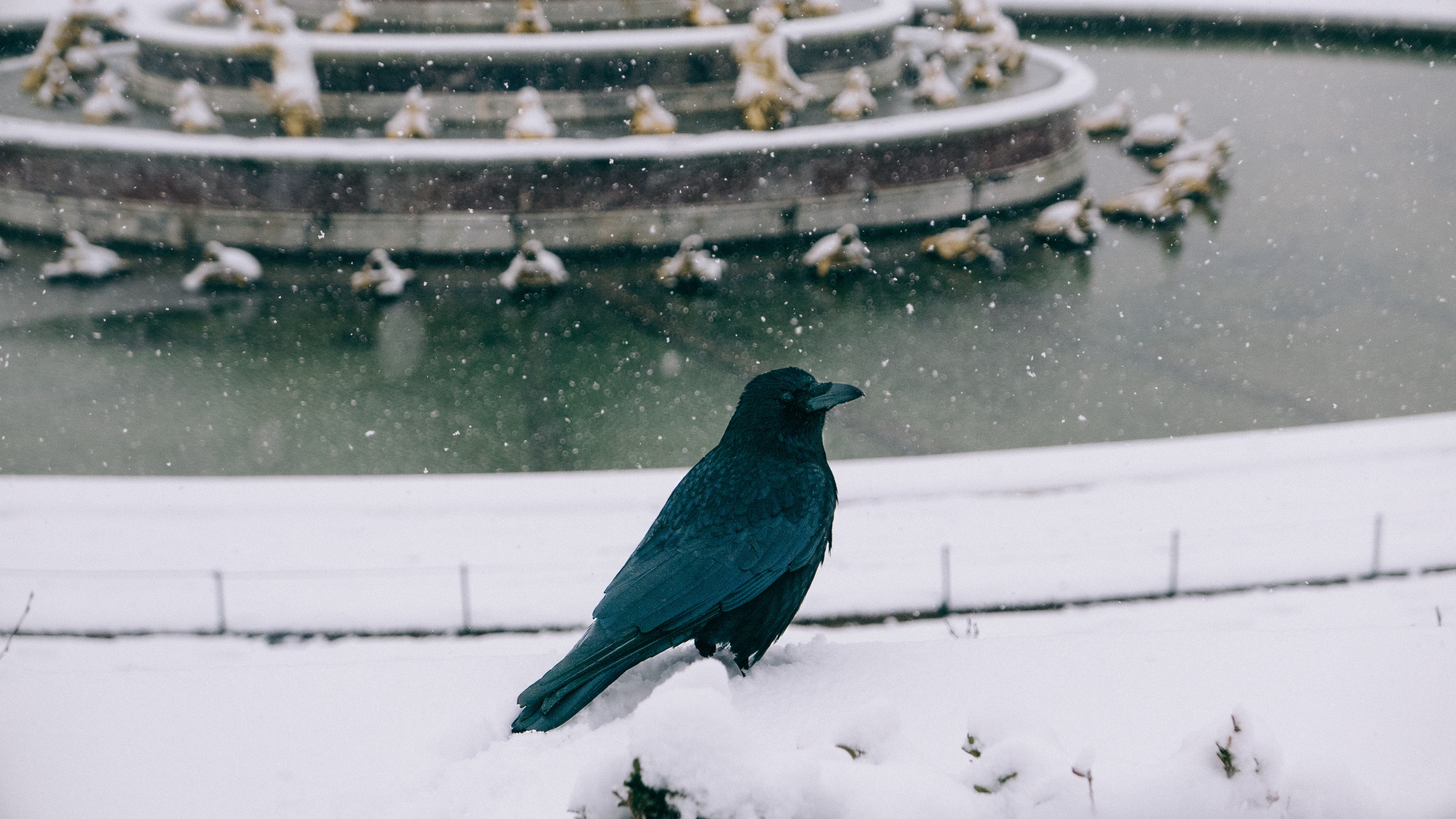 black bird on white surface