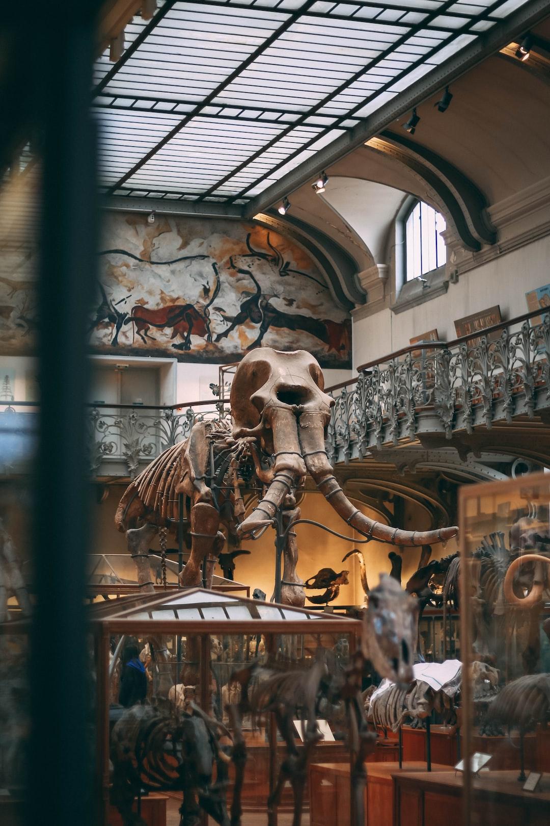Mammuth in a museum
